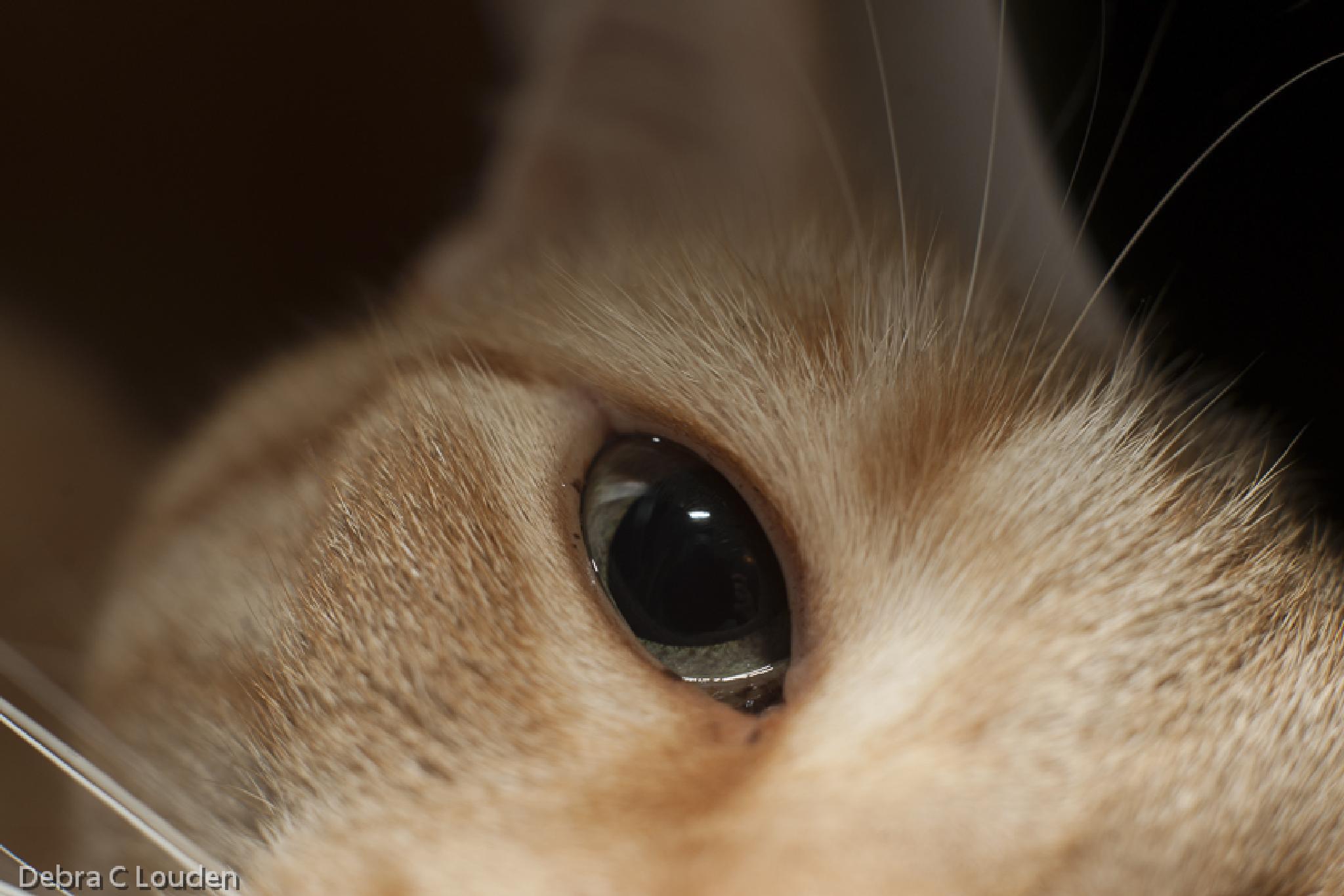 Cat Eye by debra.louden1
