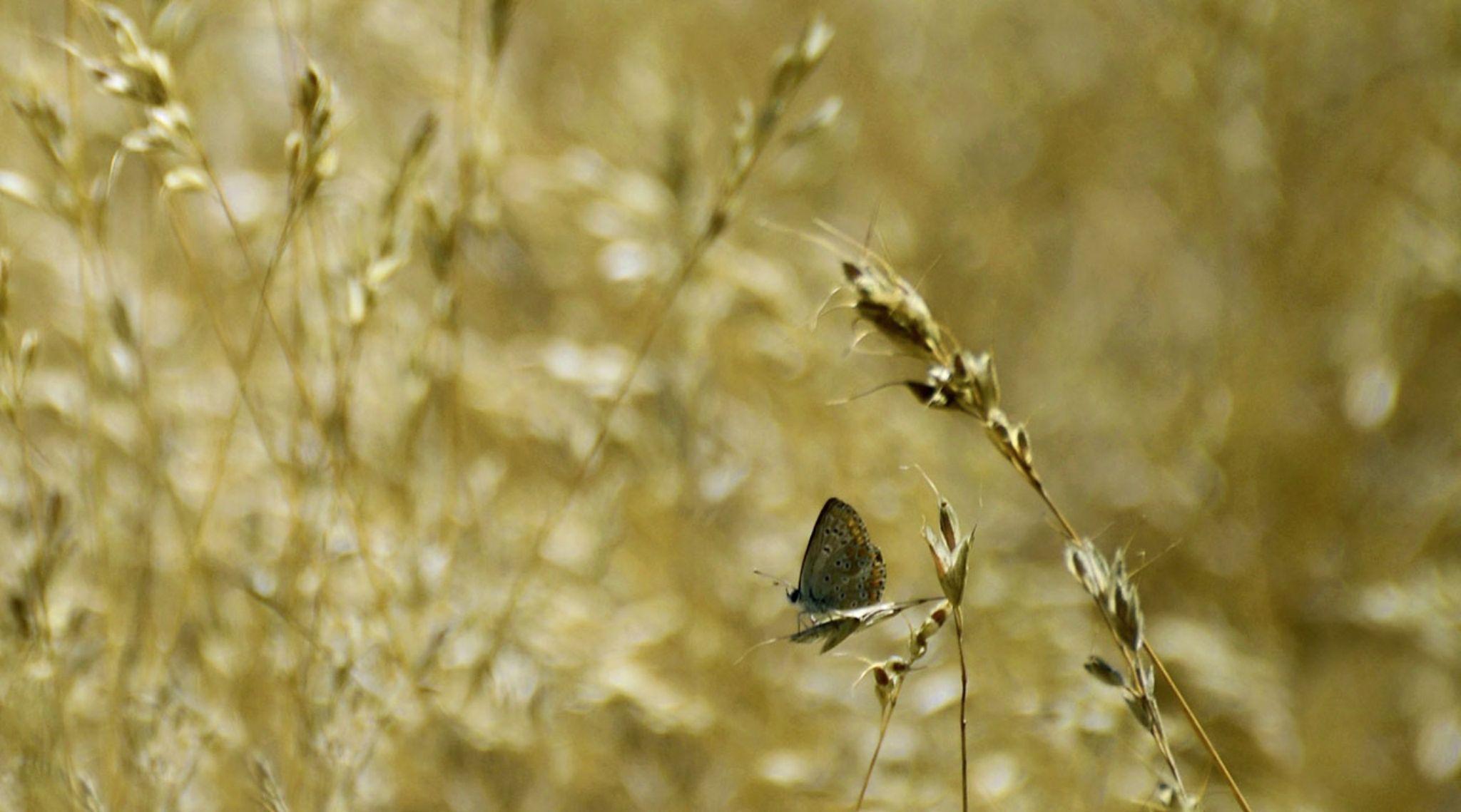 Between the Grass Hidden by Filiz Bariskan