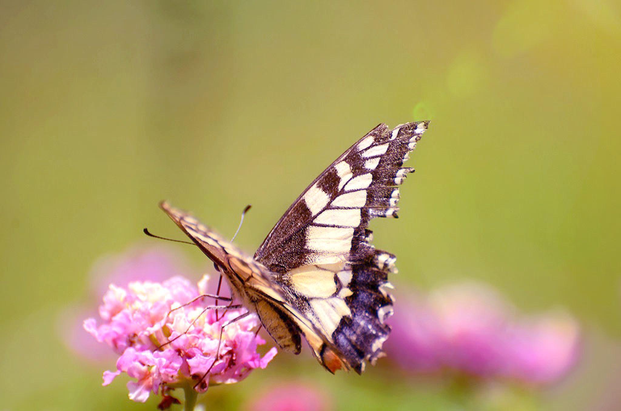 Broken Wings But Cheerfully by Filiz Bariskan