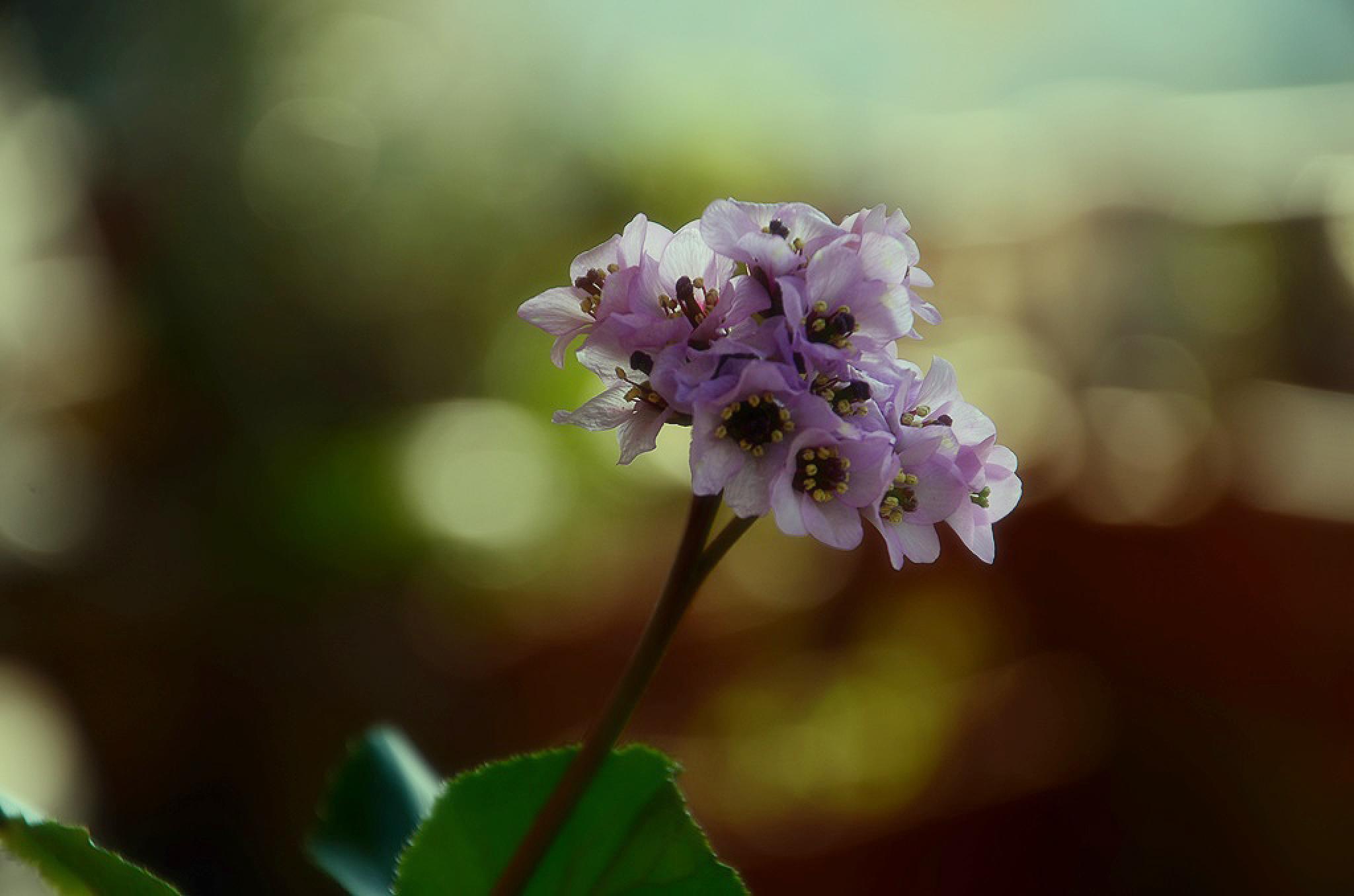 Purple Flowers by Filiz Bariskan
