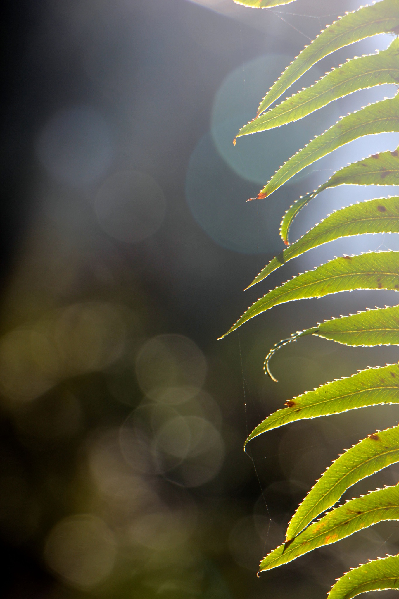 Fern Leaves by Mend30012