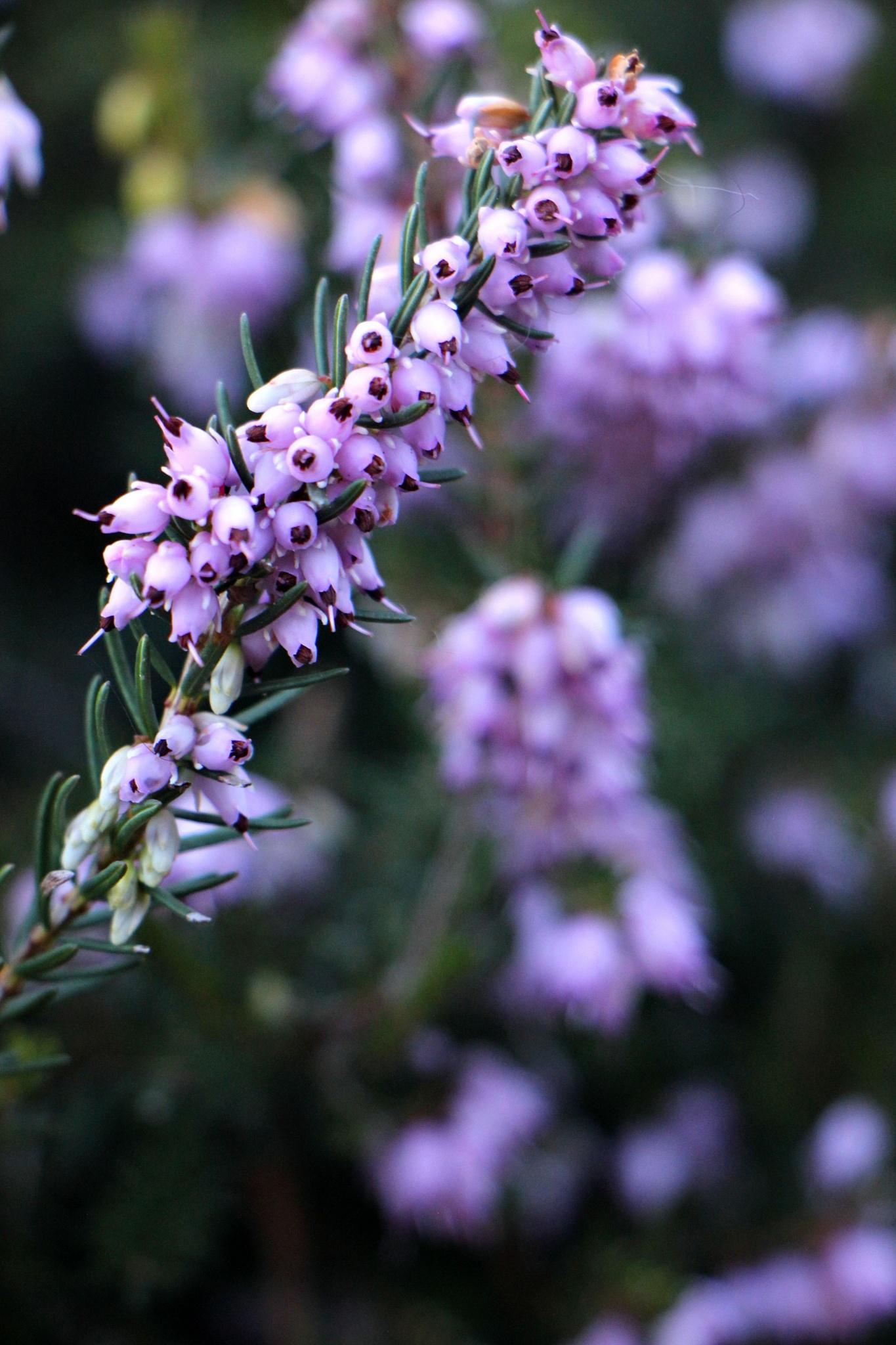 Little Purple Flowers by Mend30012