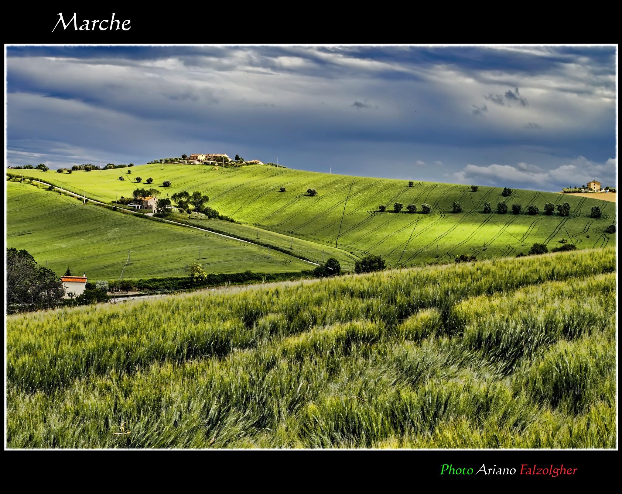 Photo in Landscape #marche #paesaggi marchigiani