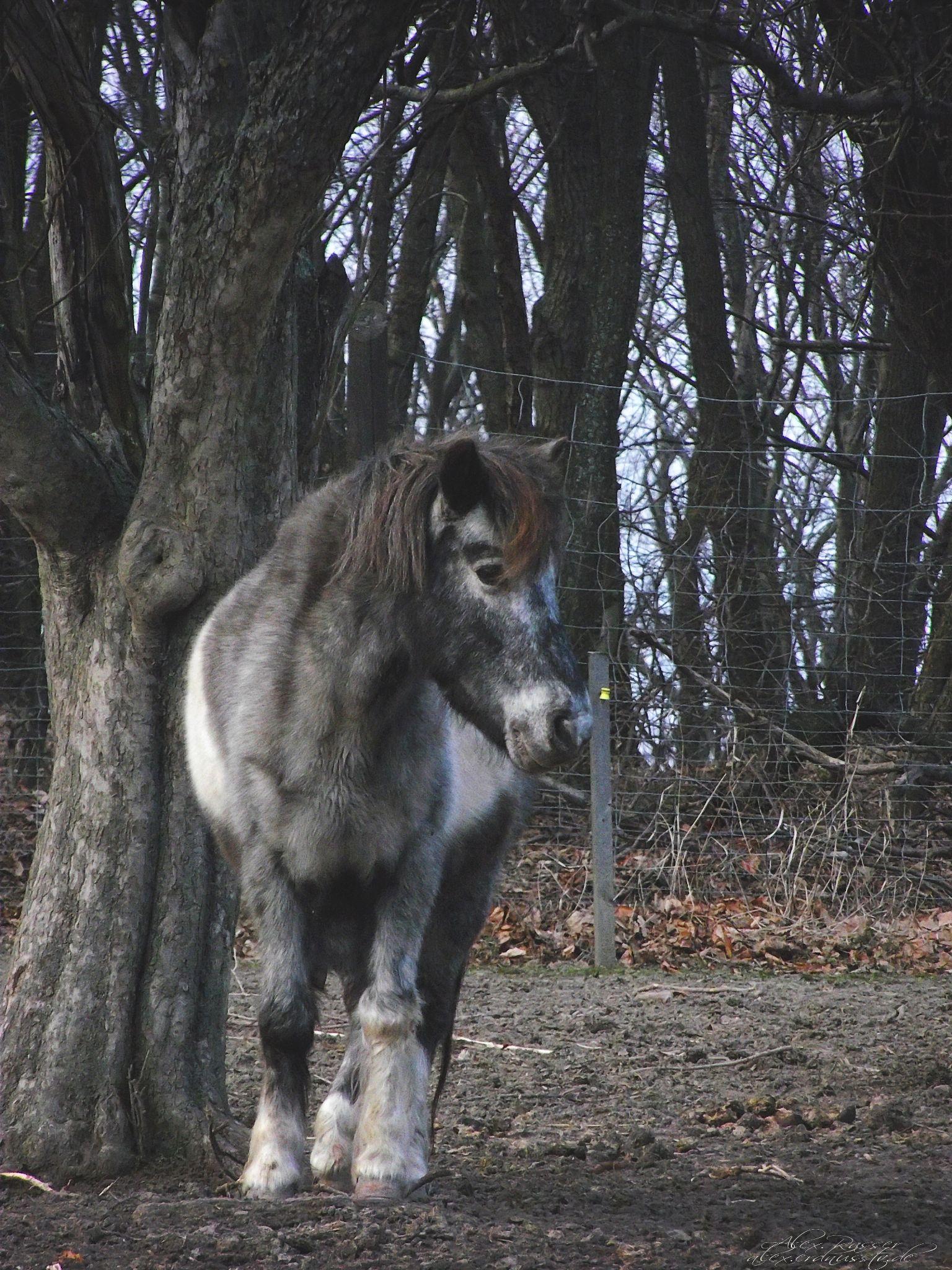 Pony by alexrasser