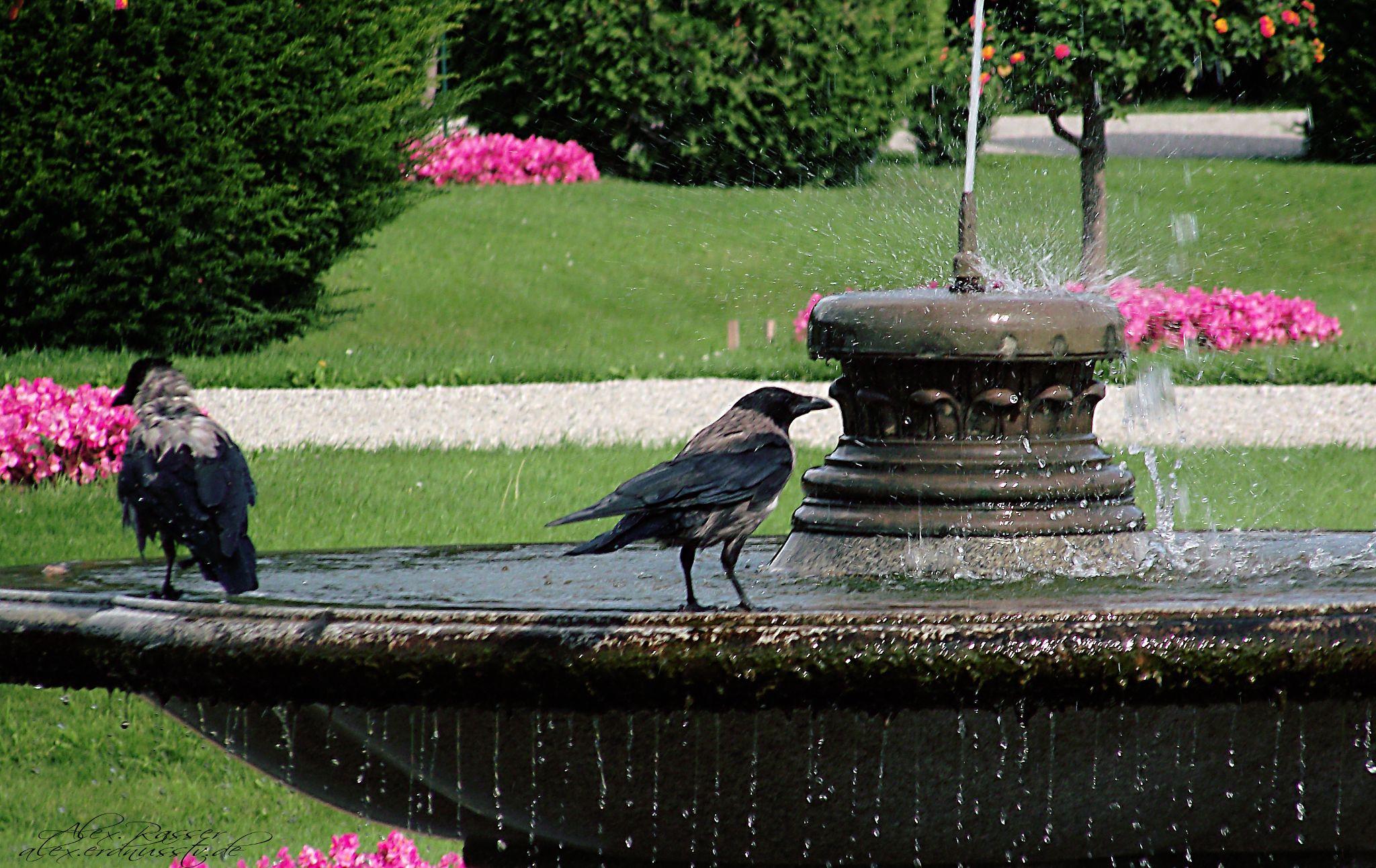 Vogelbad by alexrasser