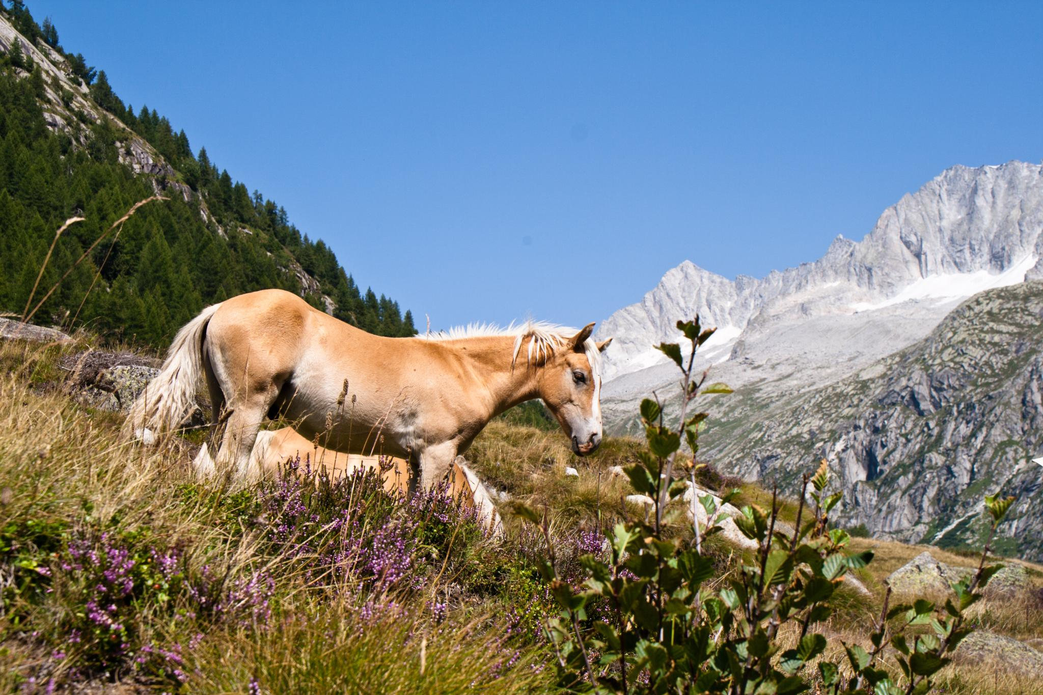 Horse by alessandronicolodi