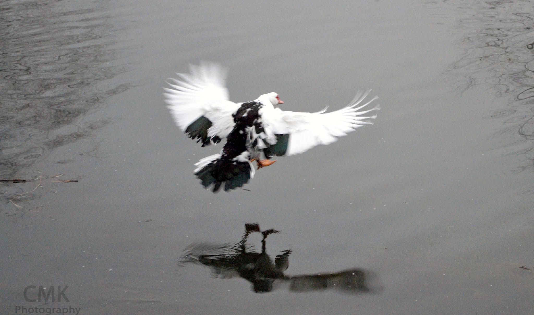flying to float  by Chris Kreiser