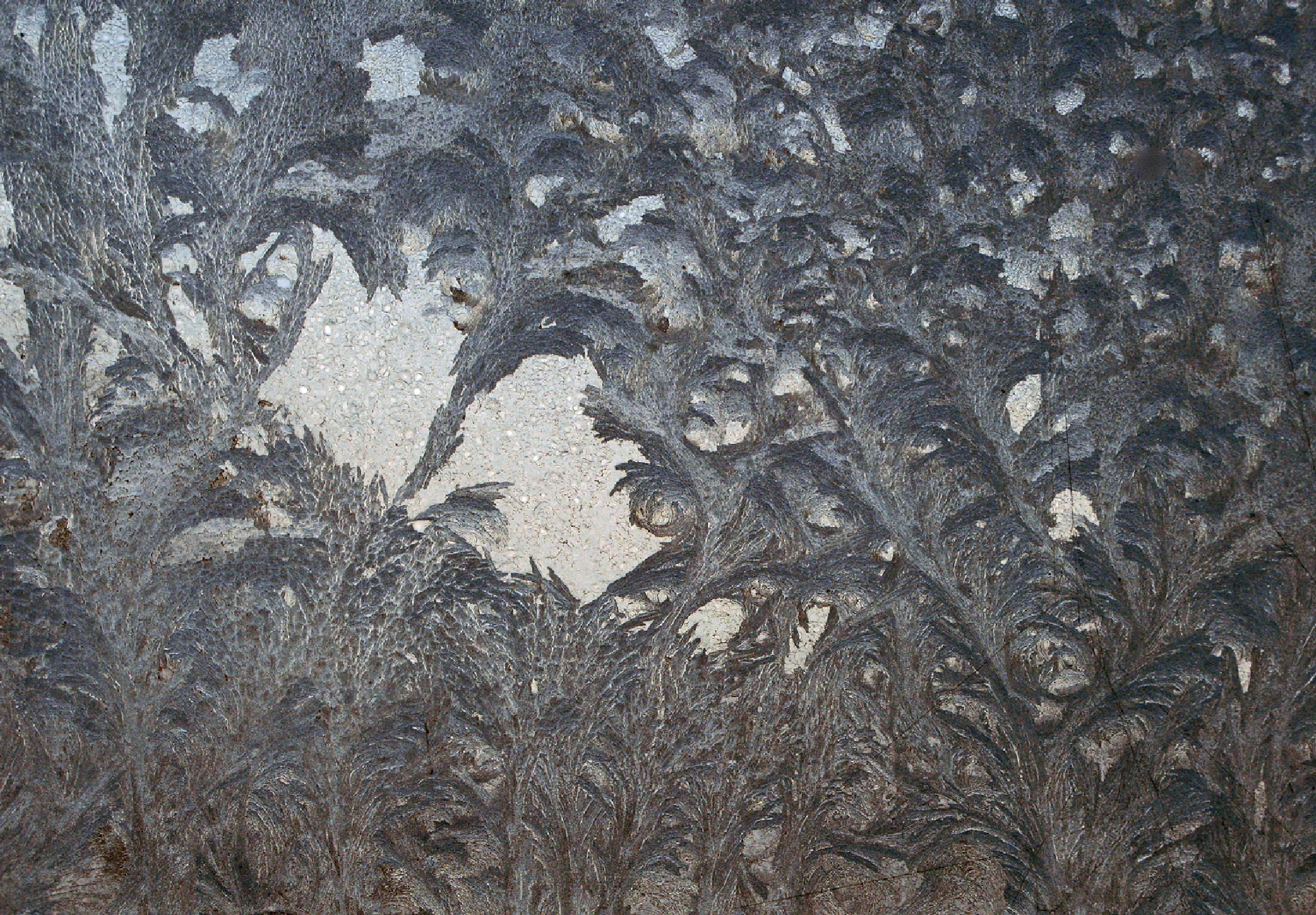 Frosty flowers by vedvejen
