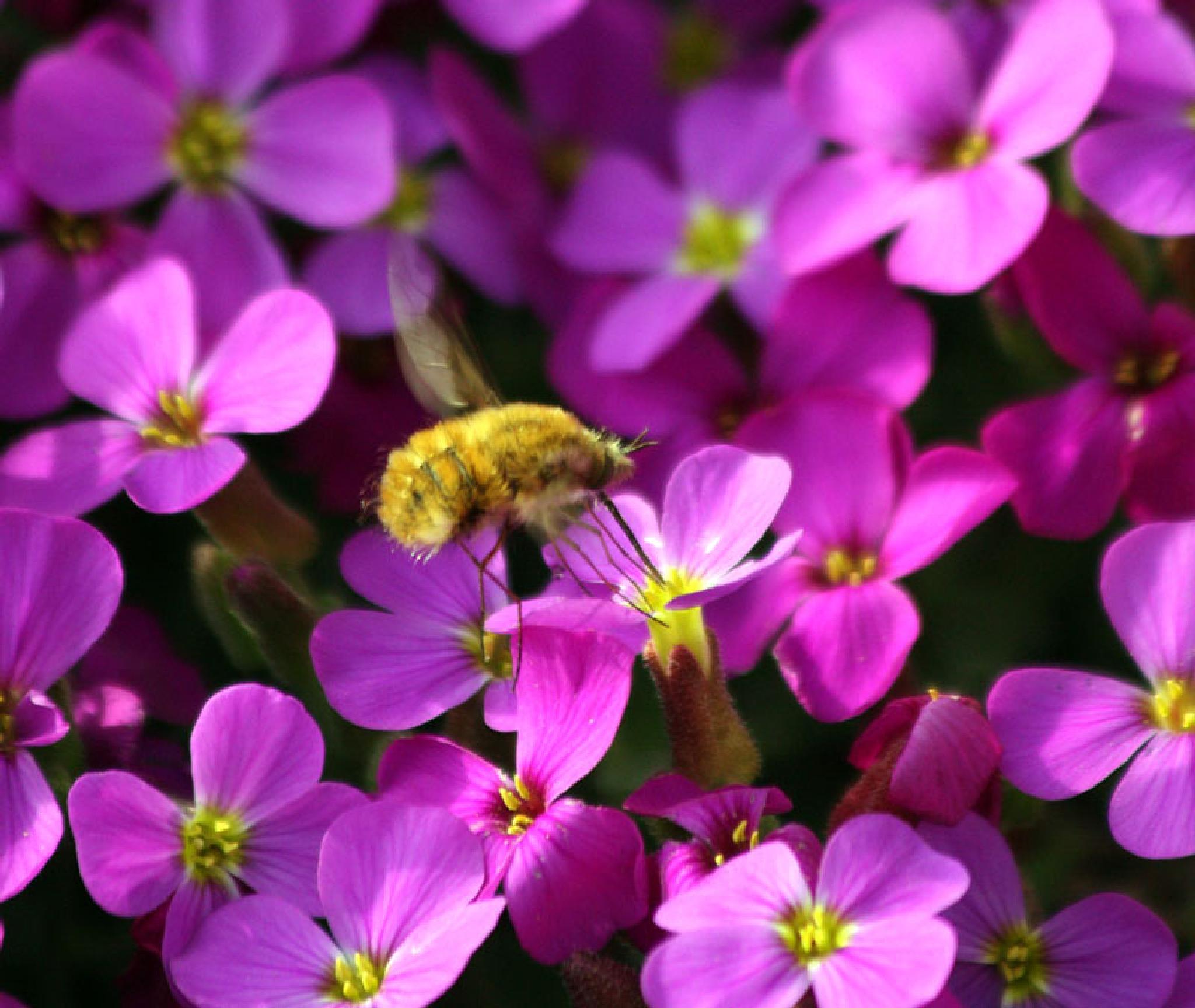 Bee Godsted by vedvejen