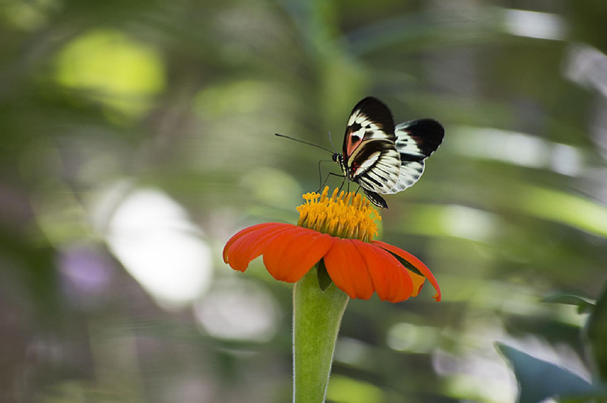 Butterfly World by shelly.whitecibula