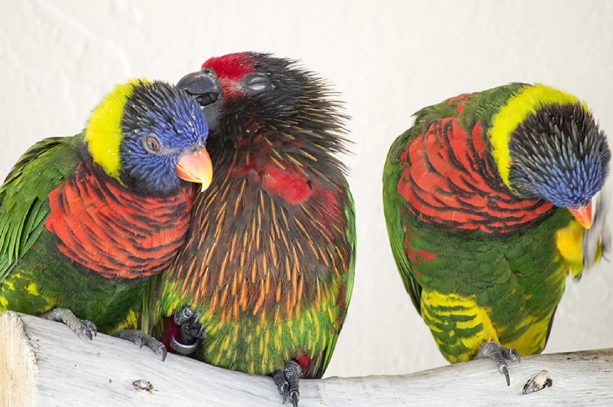 Butterfly World - Parrots by shelly.whitecibula