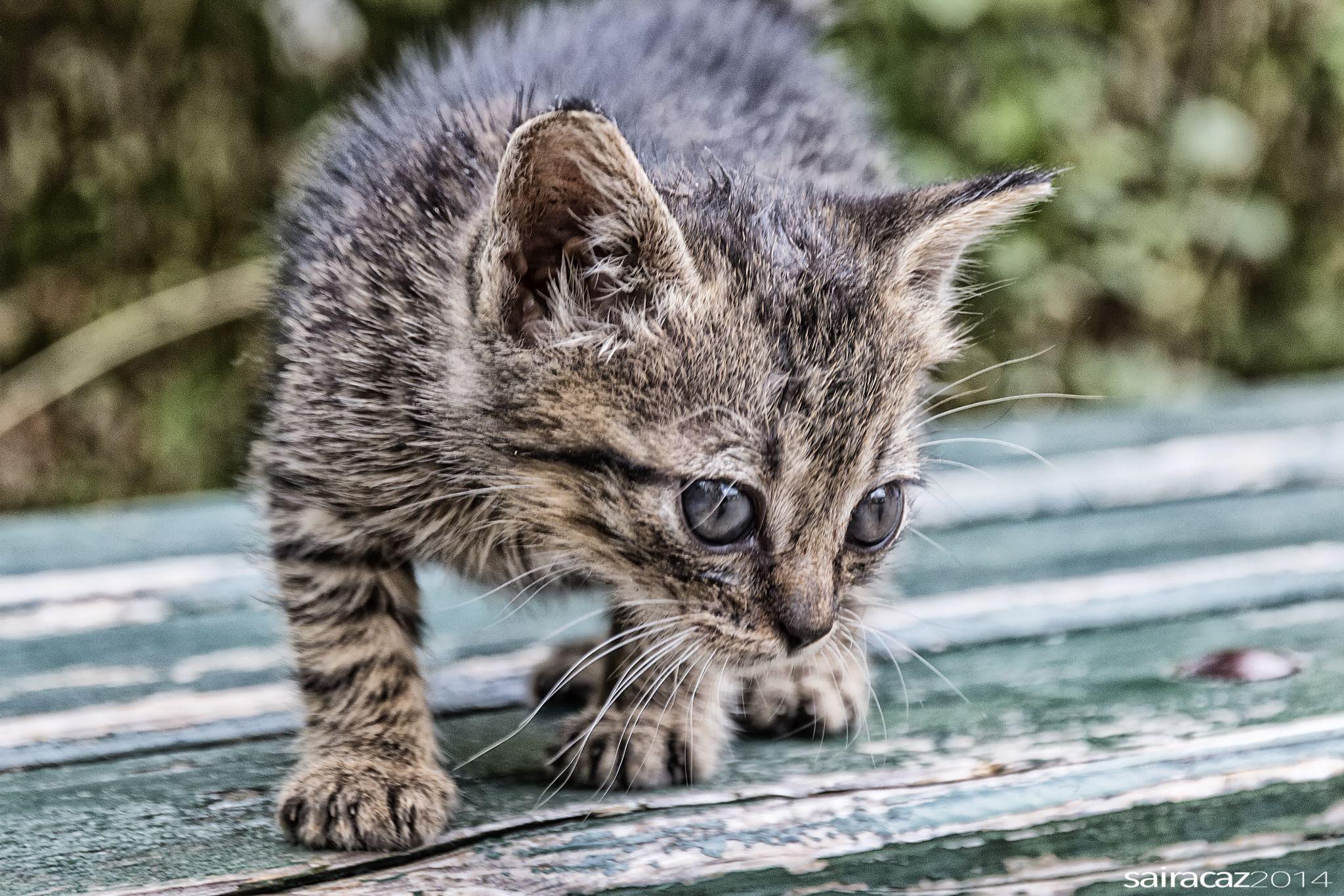 He visto un lindo gatito!! by ZacariasAbad