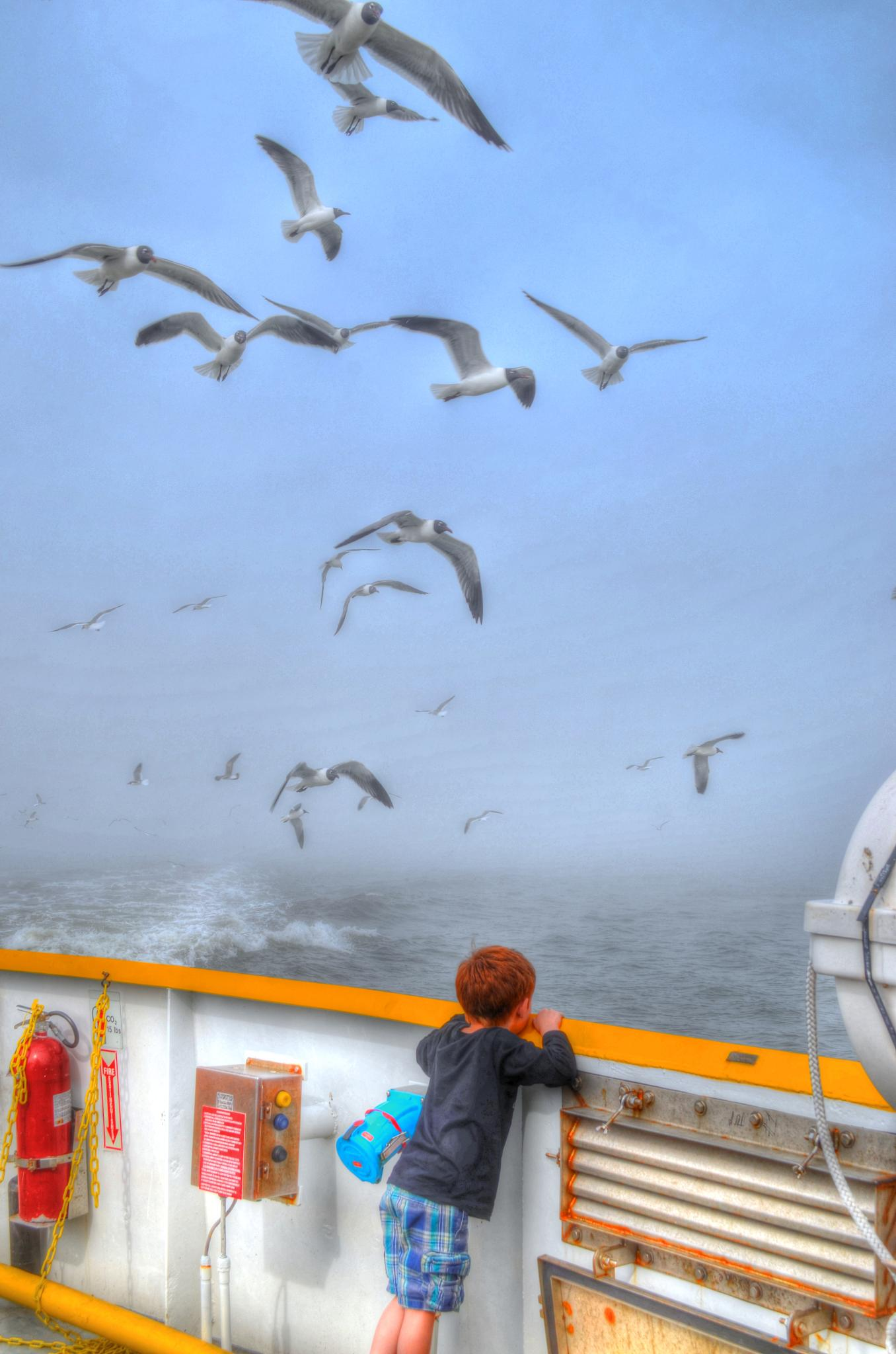 Boy and Gulls at Bow by kersten.conway