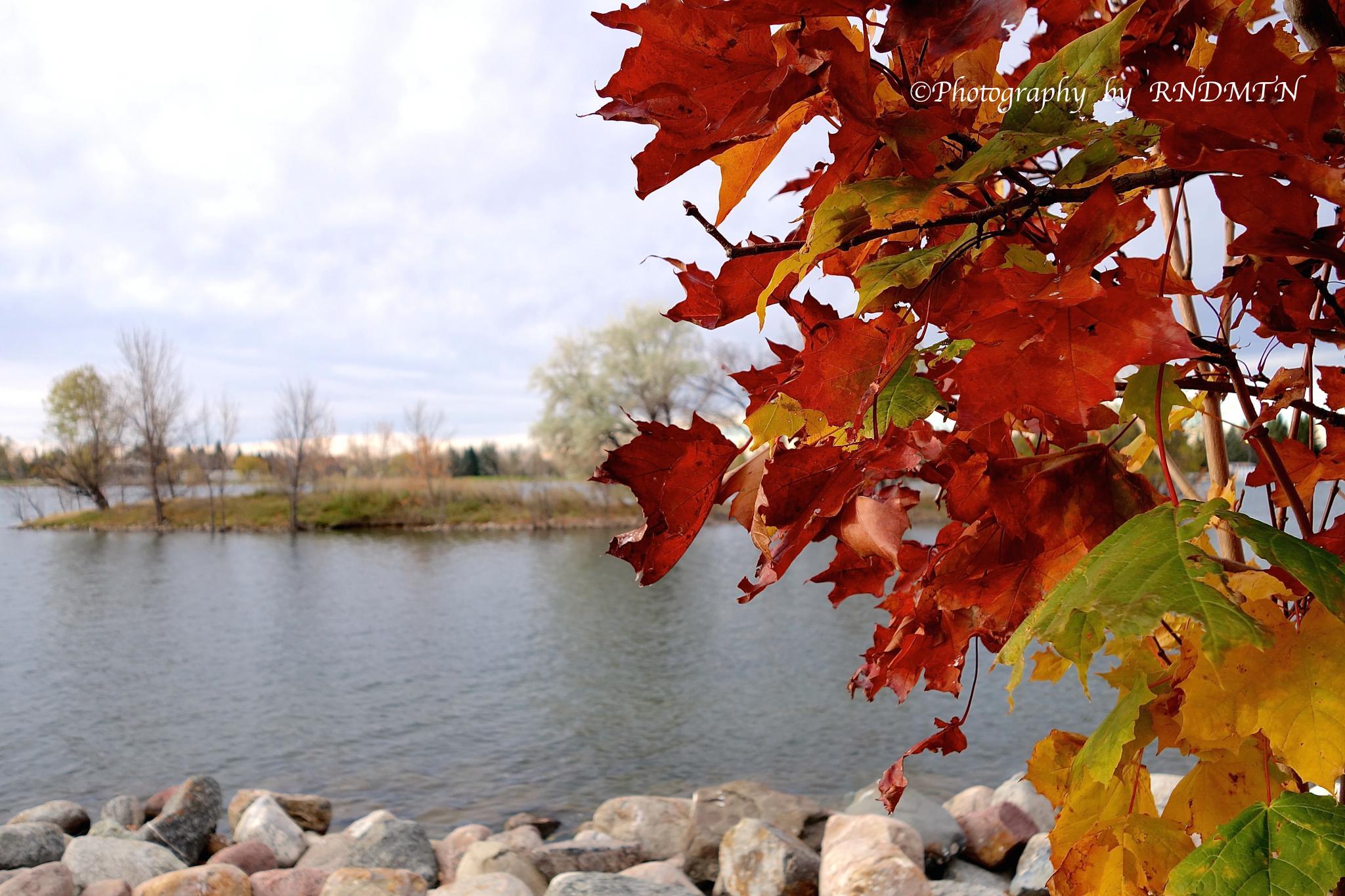 Photo in Random #fallcolors  autumn fall