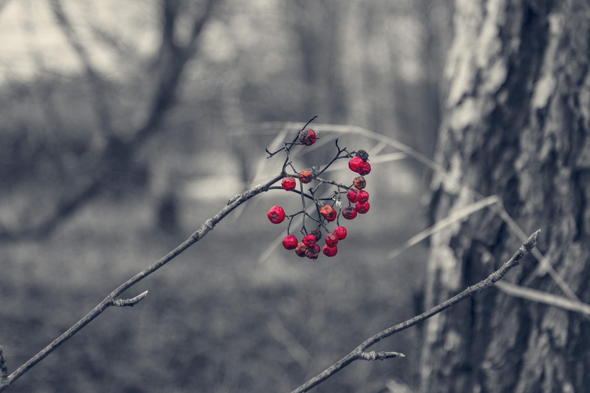 autumn by Azem Ahmed