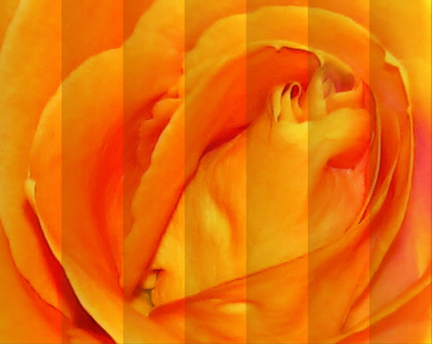 Orange Rose with Blinds by bellamahri