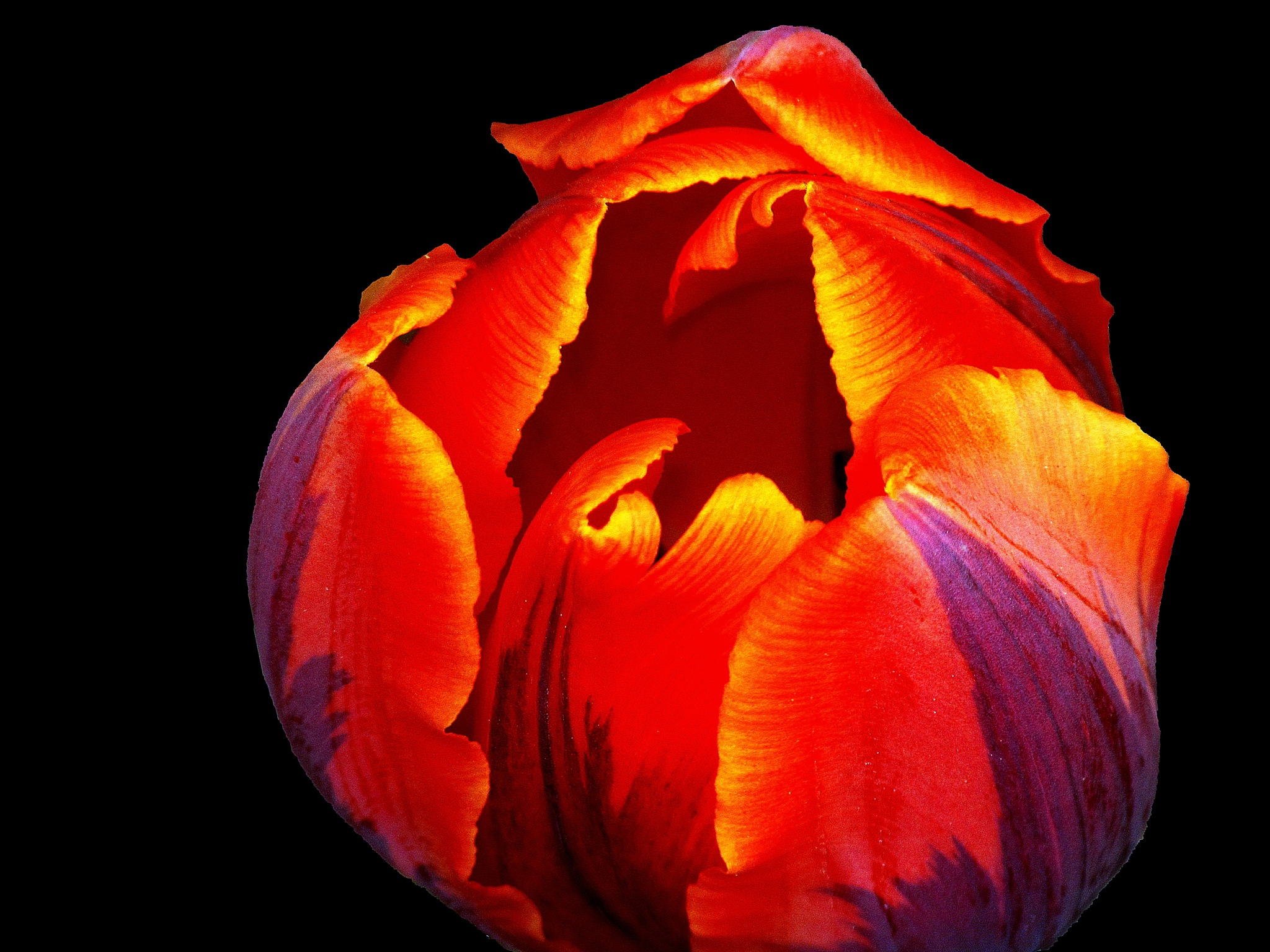 Photo in Random #close up #abstract #flower #pattern #macro #up close #orange #red #black background #solid background #tulip #nature