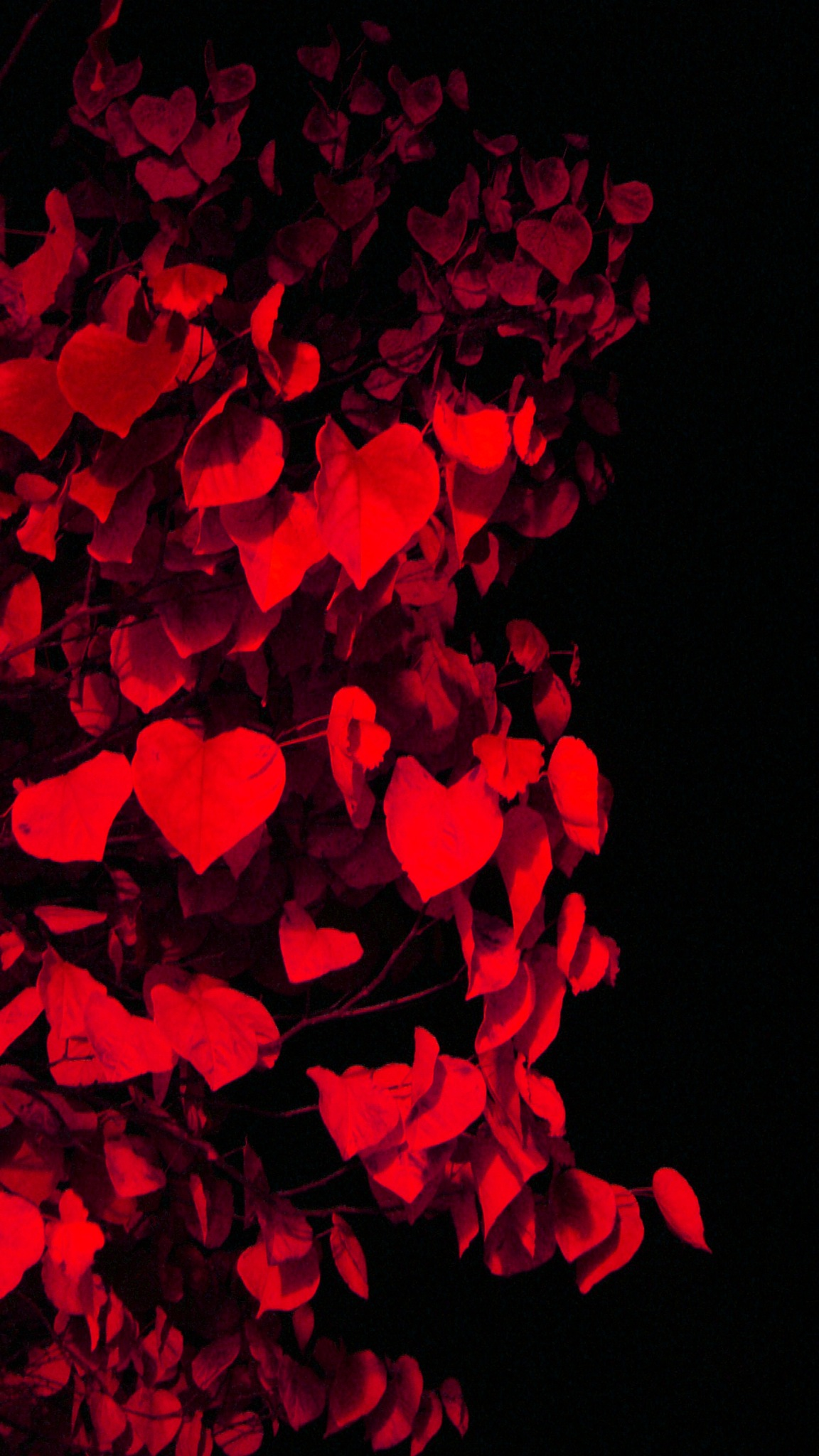 Photo in Random #abstract #close up #pattern #leaves #hearts #nature #red #redbud #valentine #valentine's day