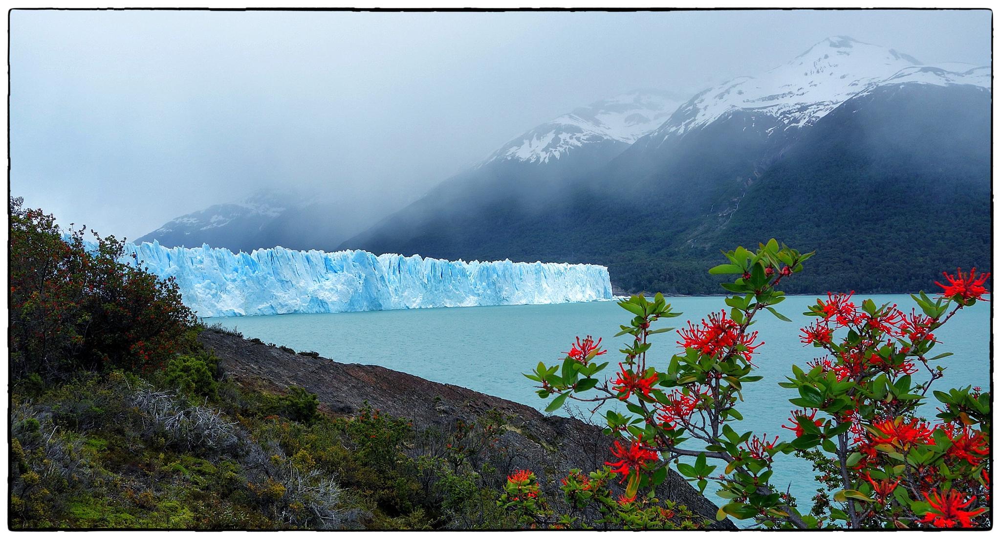 Notros i el Perito Moreno by bescosx