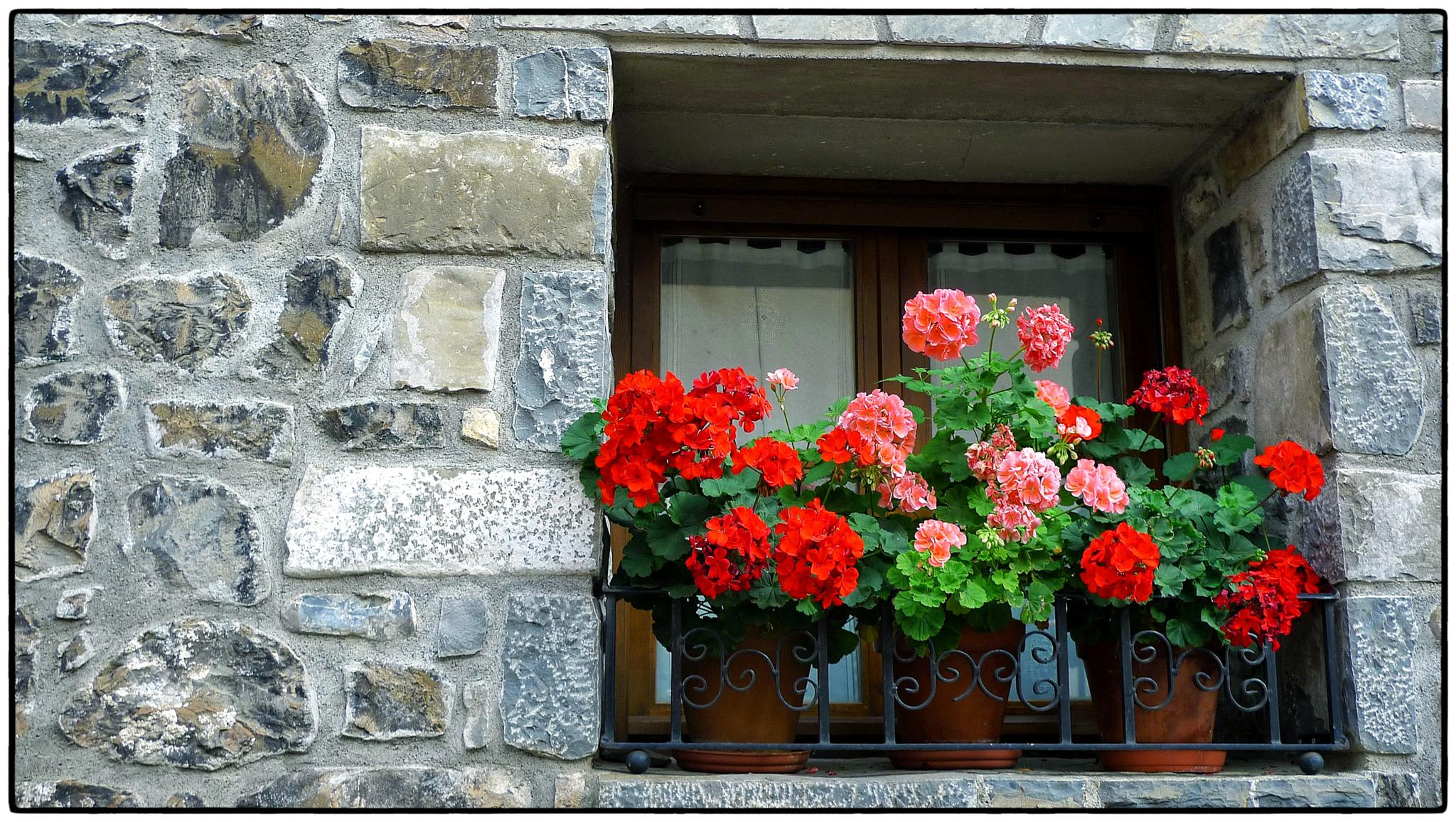Geranis a la finestra. Hecho (Huesca) by bescosx
