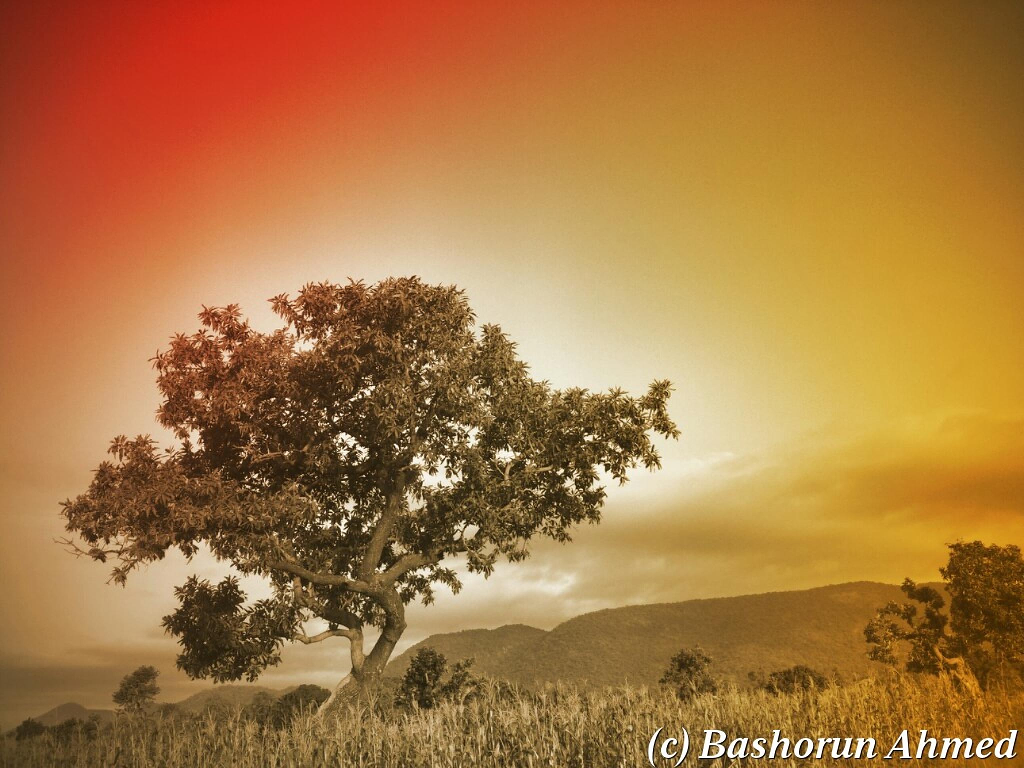 The Tree by Bashorun Ahmed