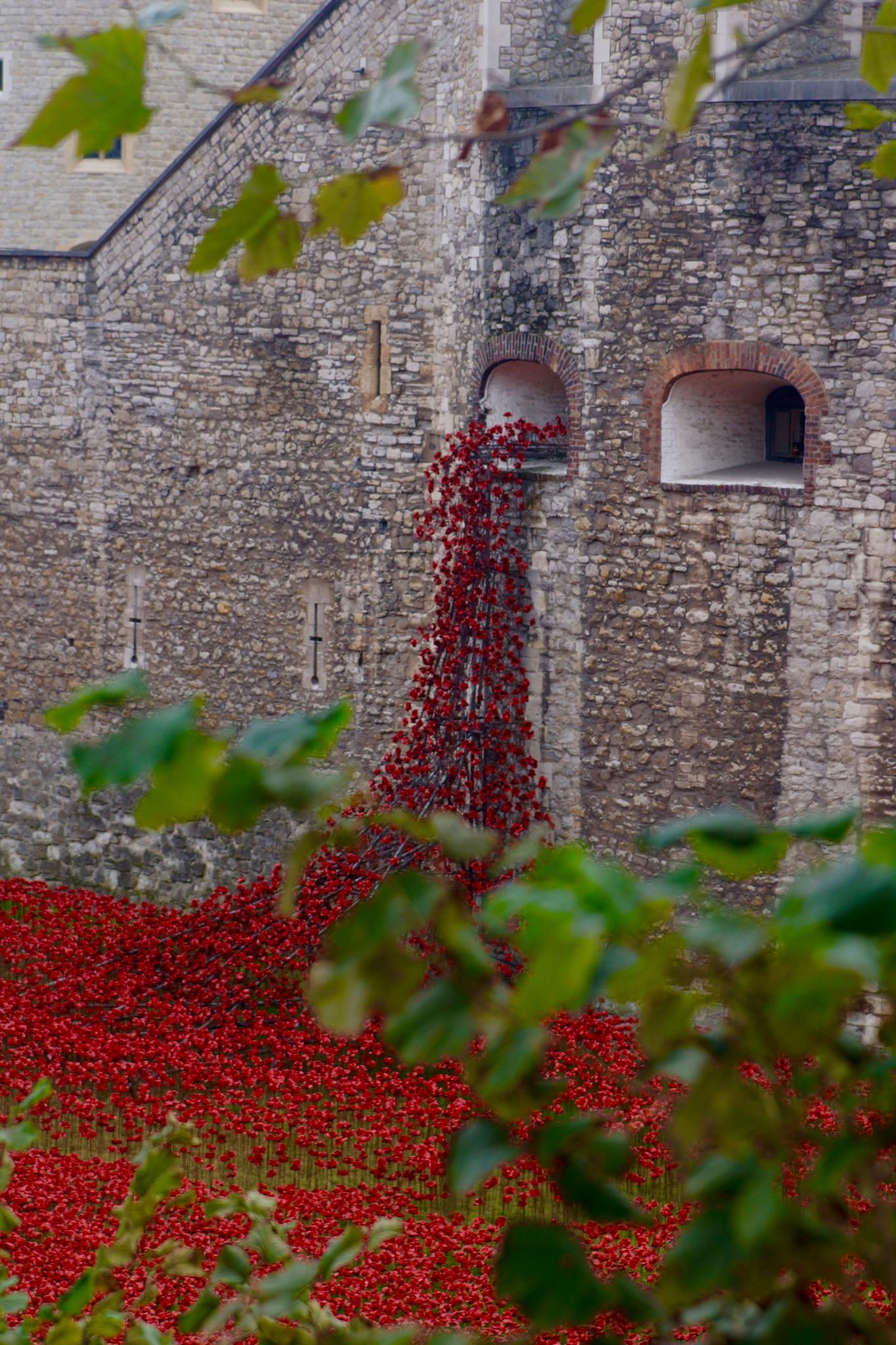 Poppies Tower of London by Fi Ona H