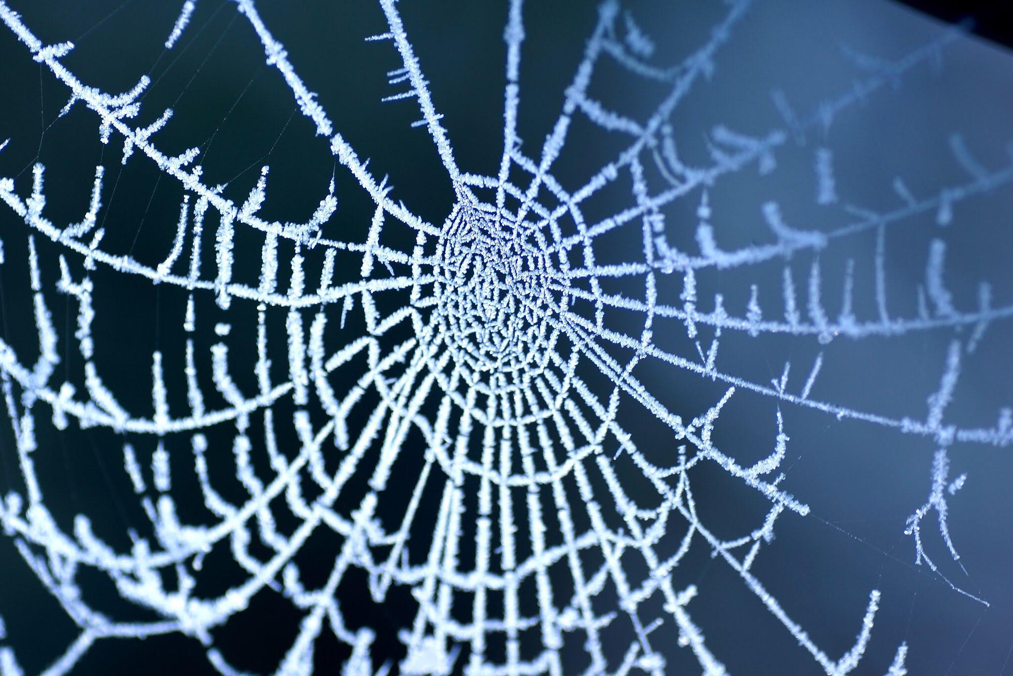 Frosty Web by Fi Ona H