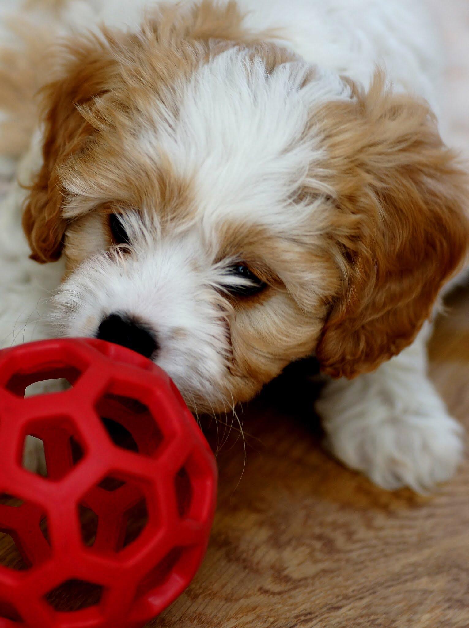 Puppy Love by Fi Ona H
