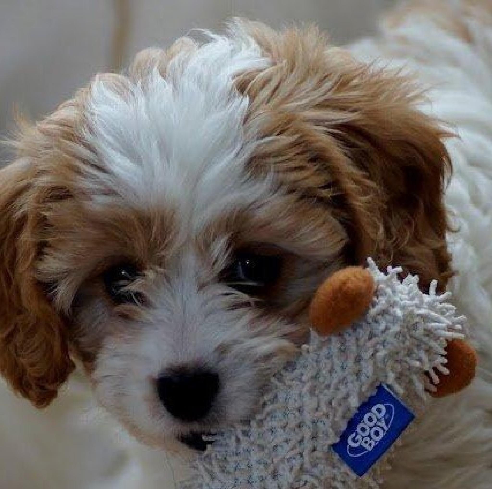 Puppy by Fi Ona H