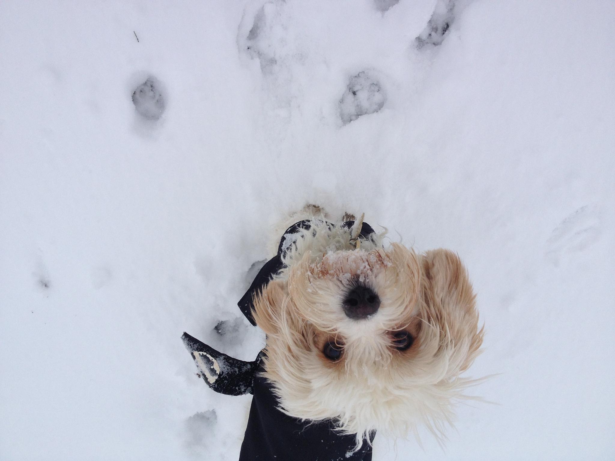 Snow Dog by Fi Ona H