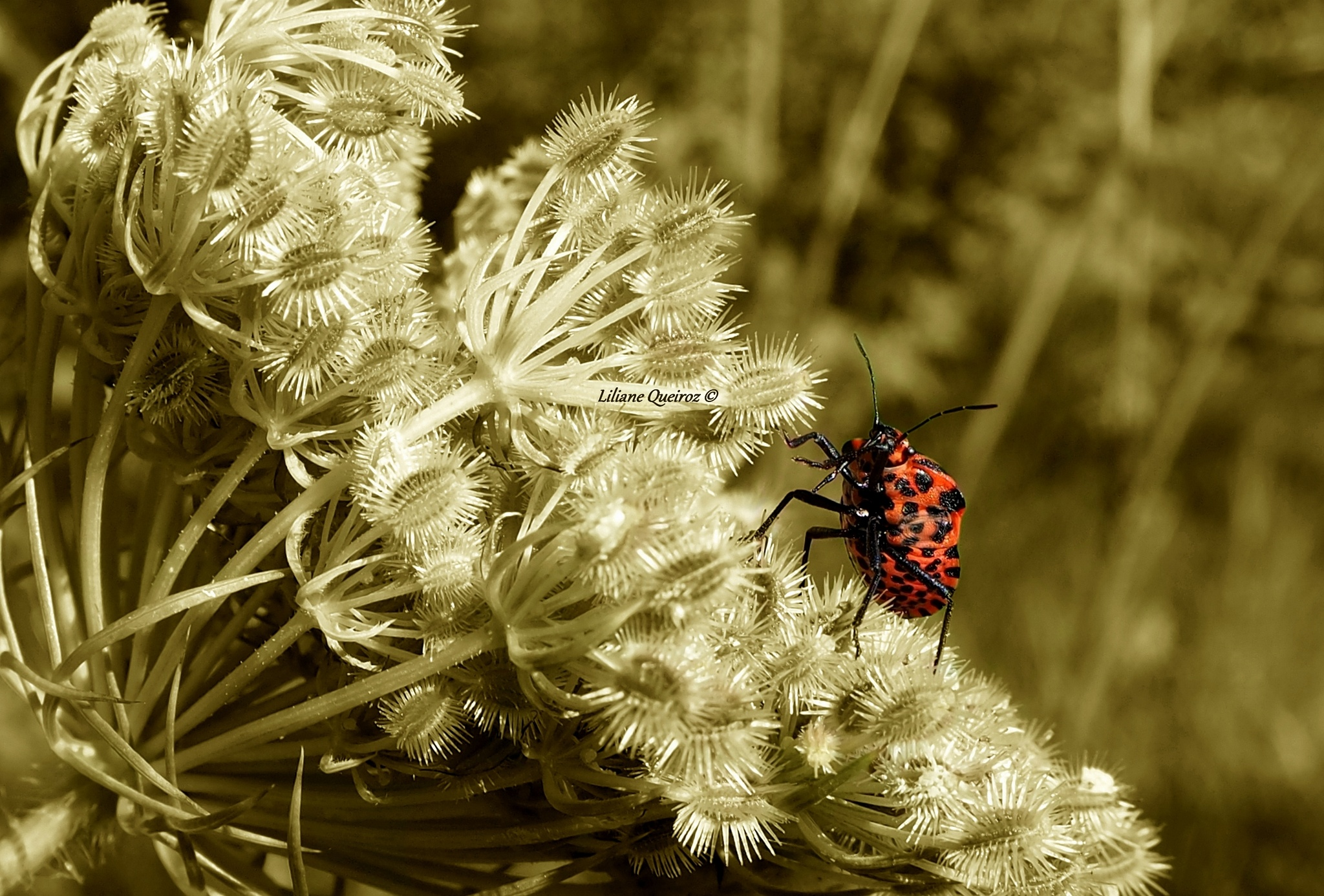 Colorful insects on sepia 1 by LQPhotos