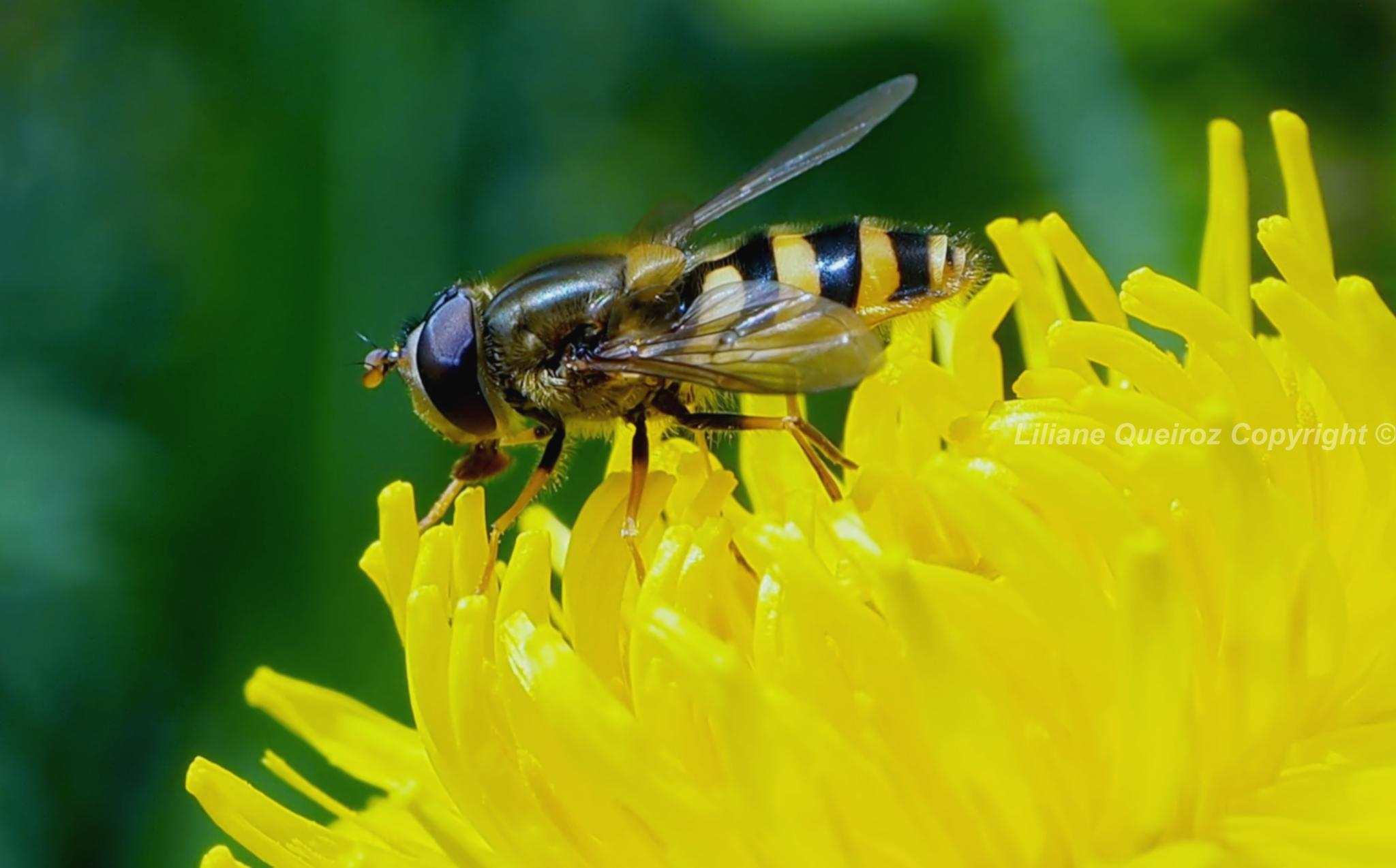 Insects of Jura 3, Swiss by LQPhotos