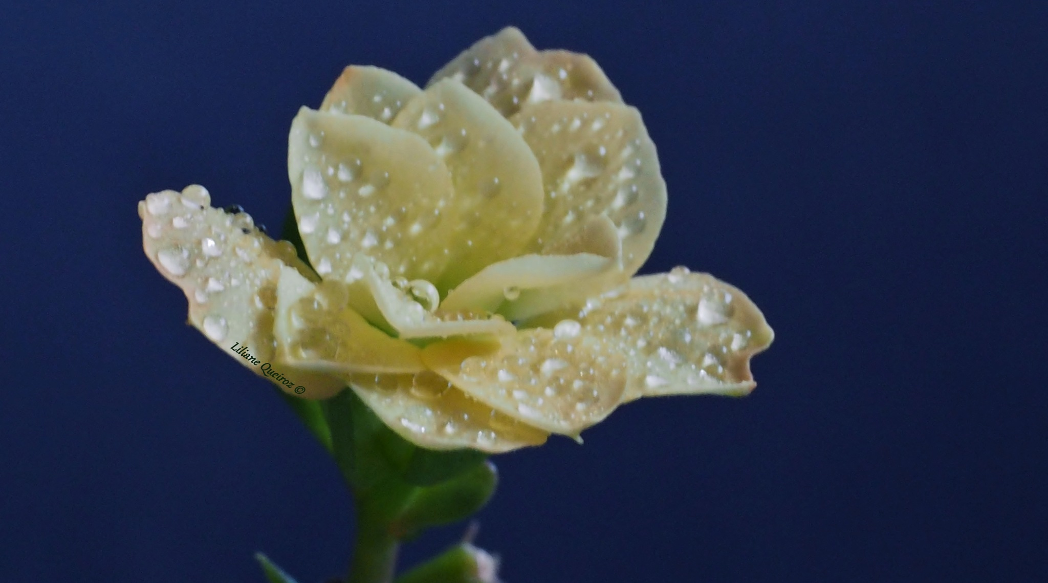 Flowers of my heart 26 by LQPhotos