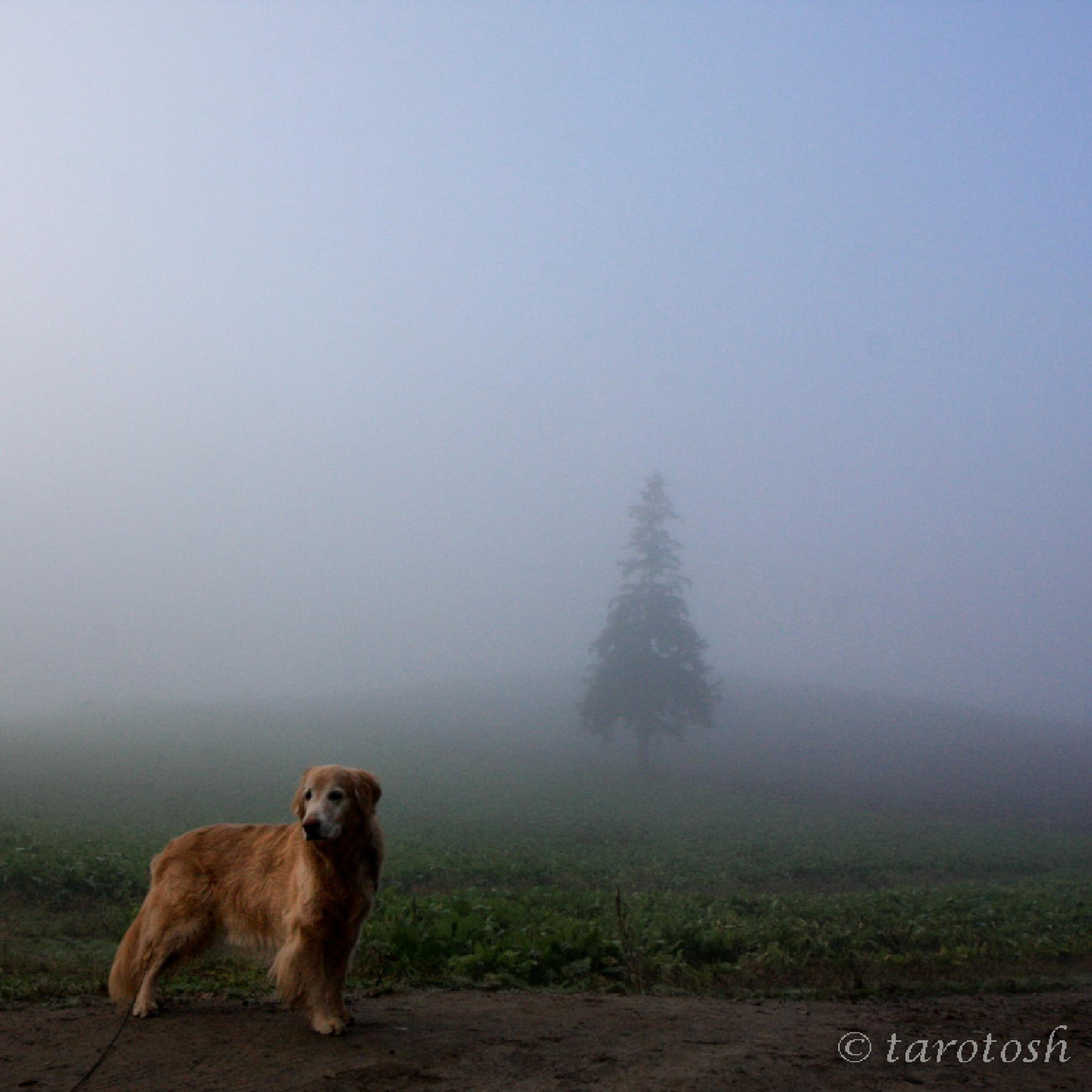 foggy morning by tarosh