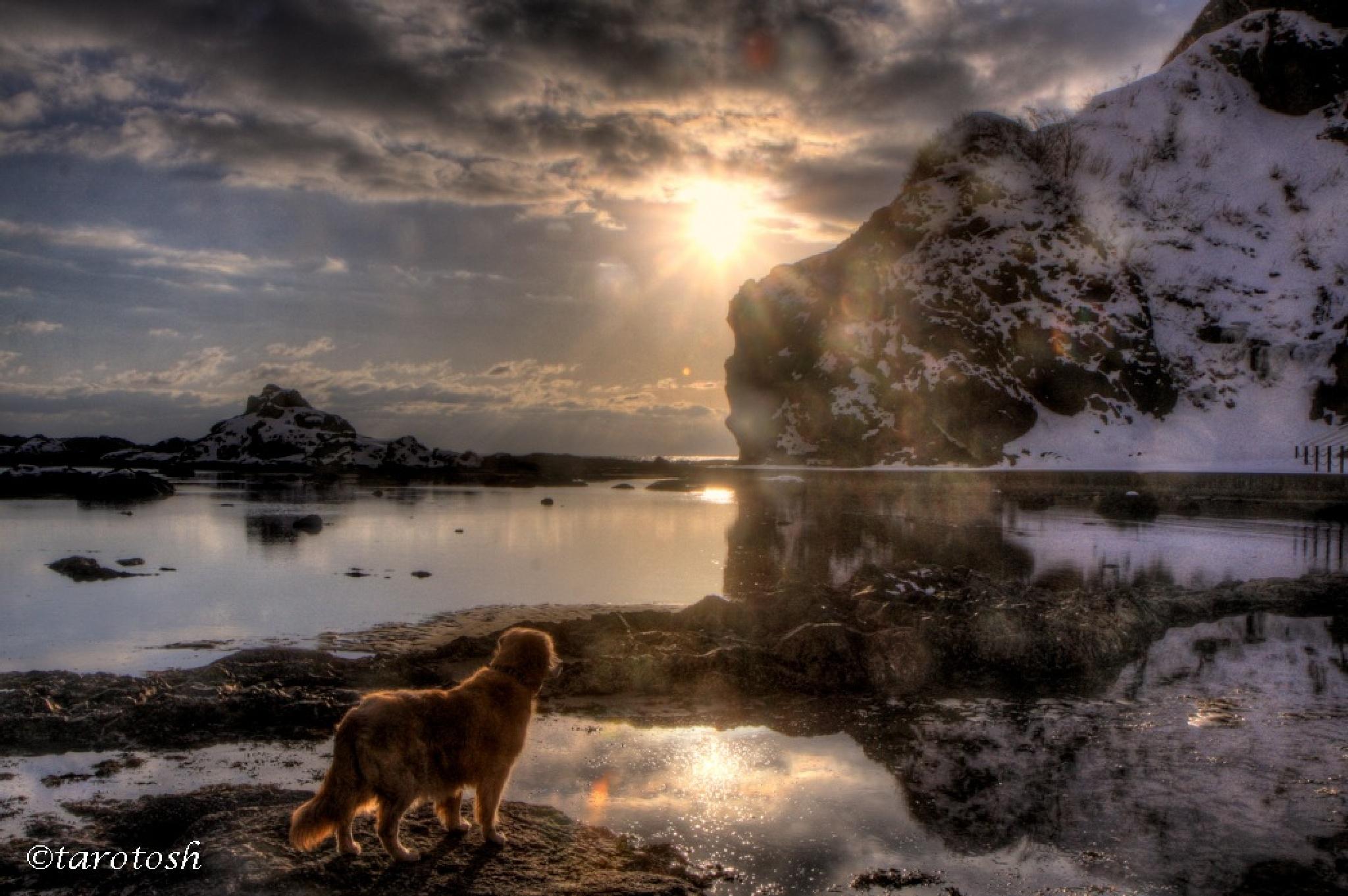 rocky shore by tarosh