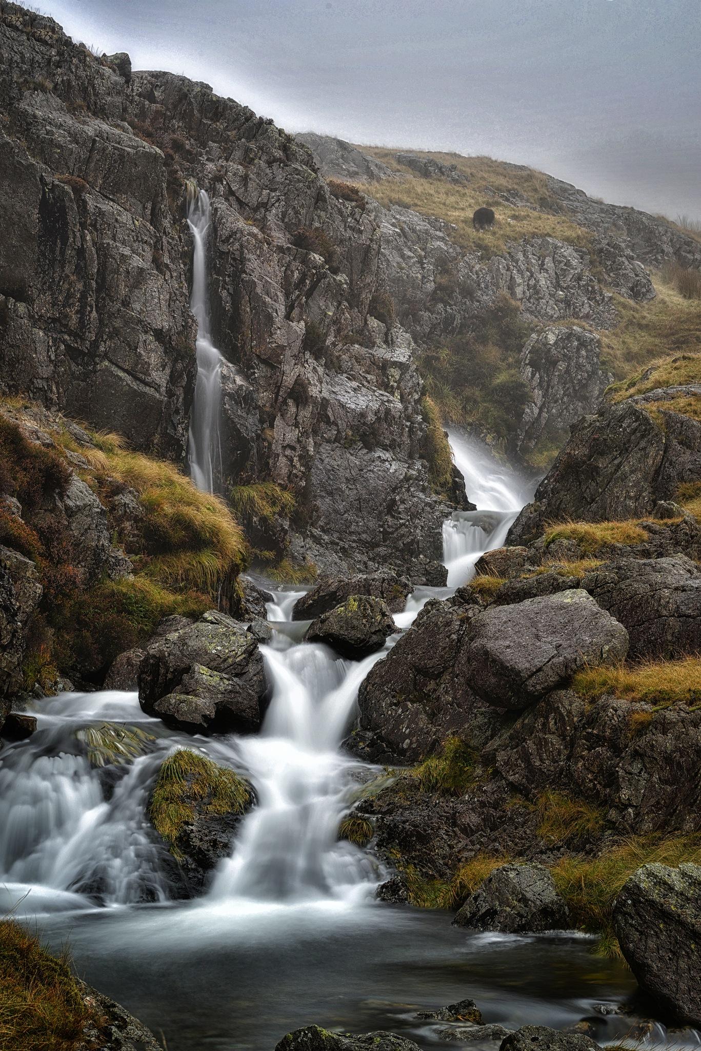 A fall in the mist by Henrik Wanders