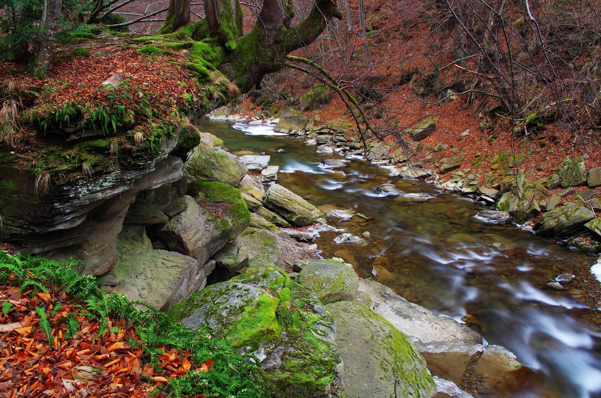"nature reserve ""Sine Wiry"" by konrad.chudzik"