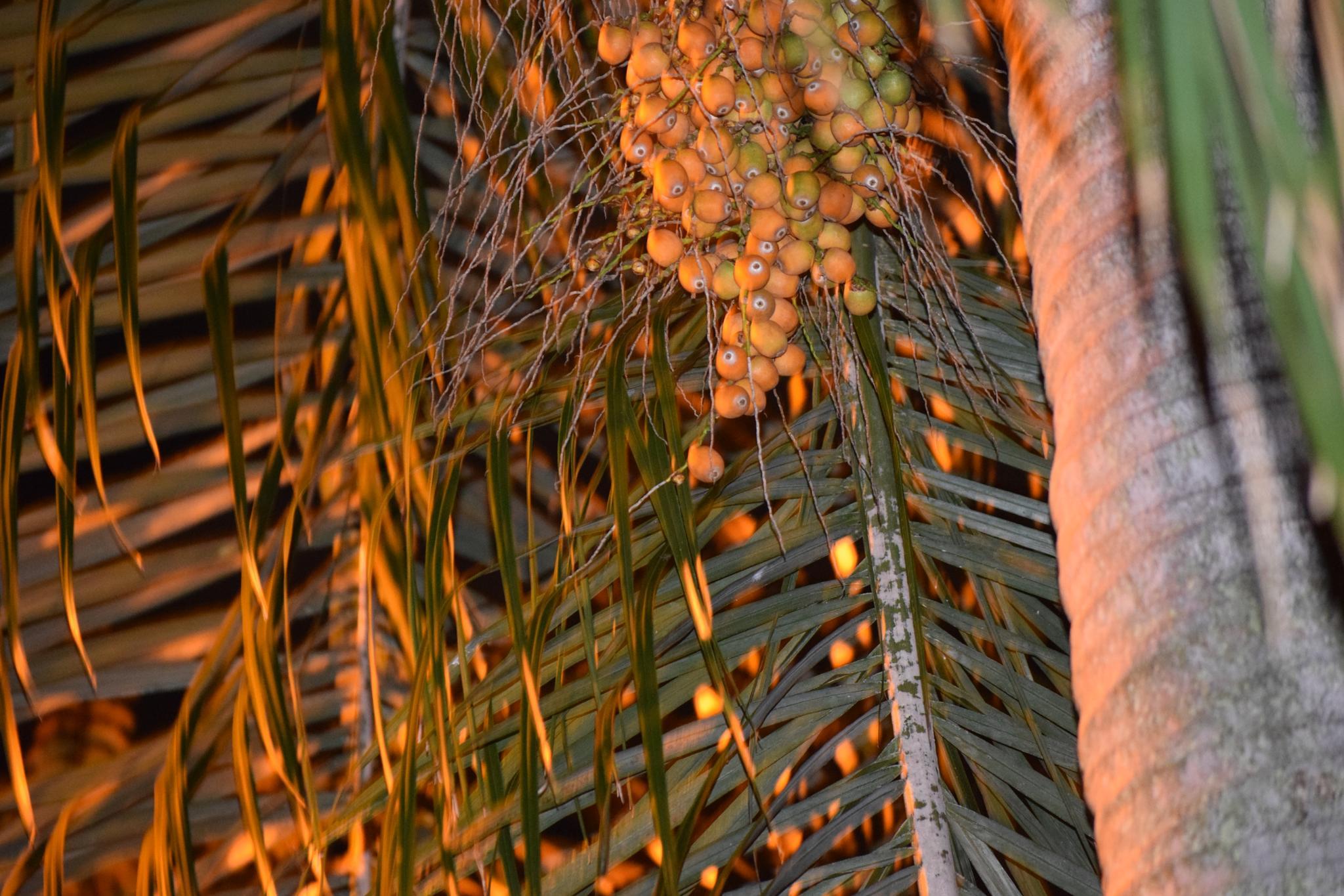 Golden Palm by joanne623