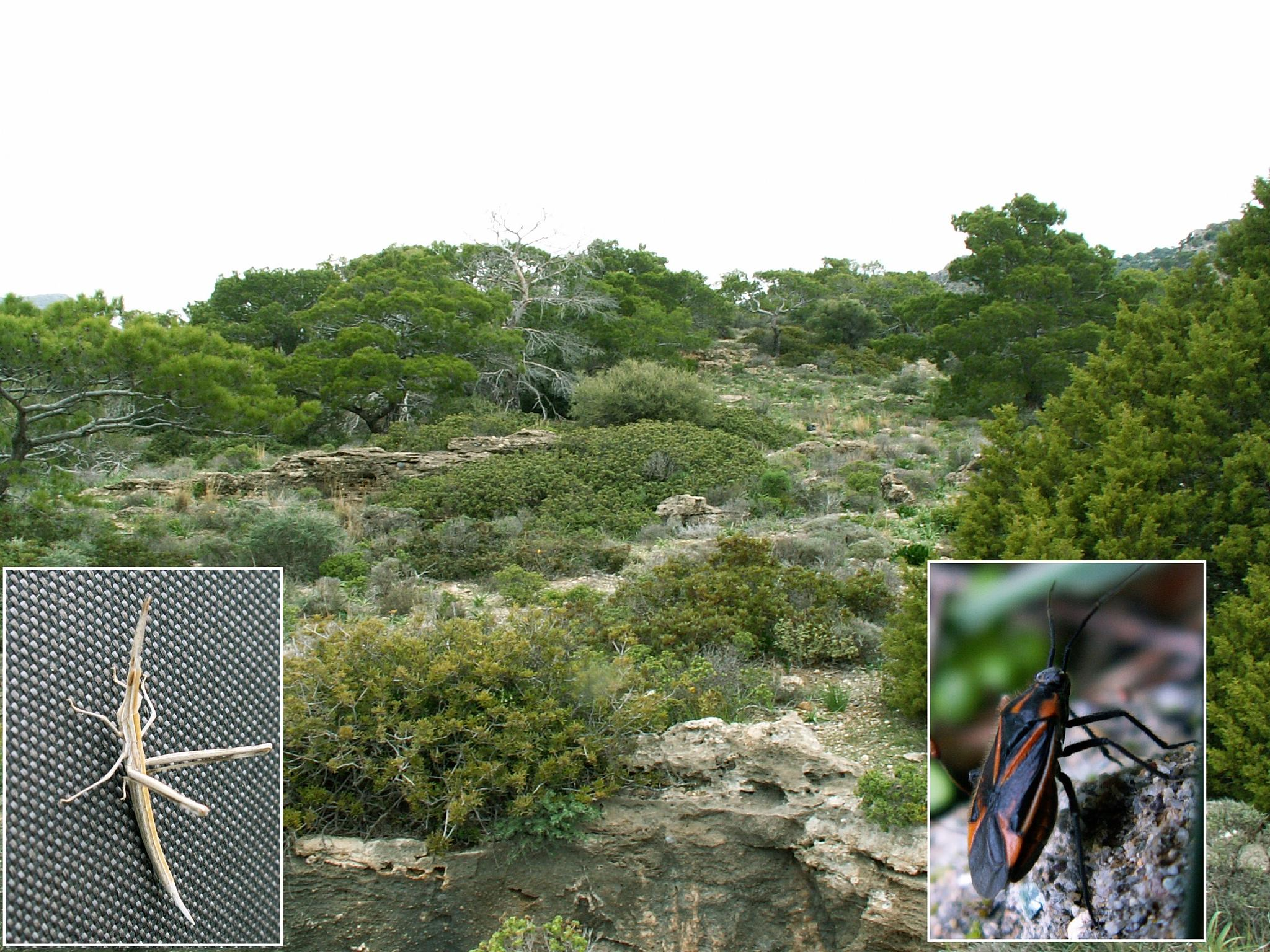 Discover #Insects, #Birds and #Flowers on a hidden #Crete plateau:  http://cretenature.blogspot.co.u by Steve Daniels