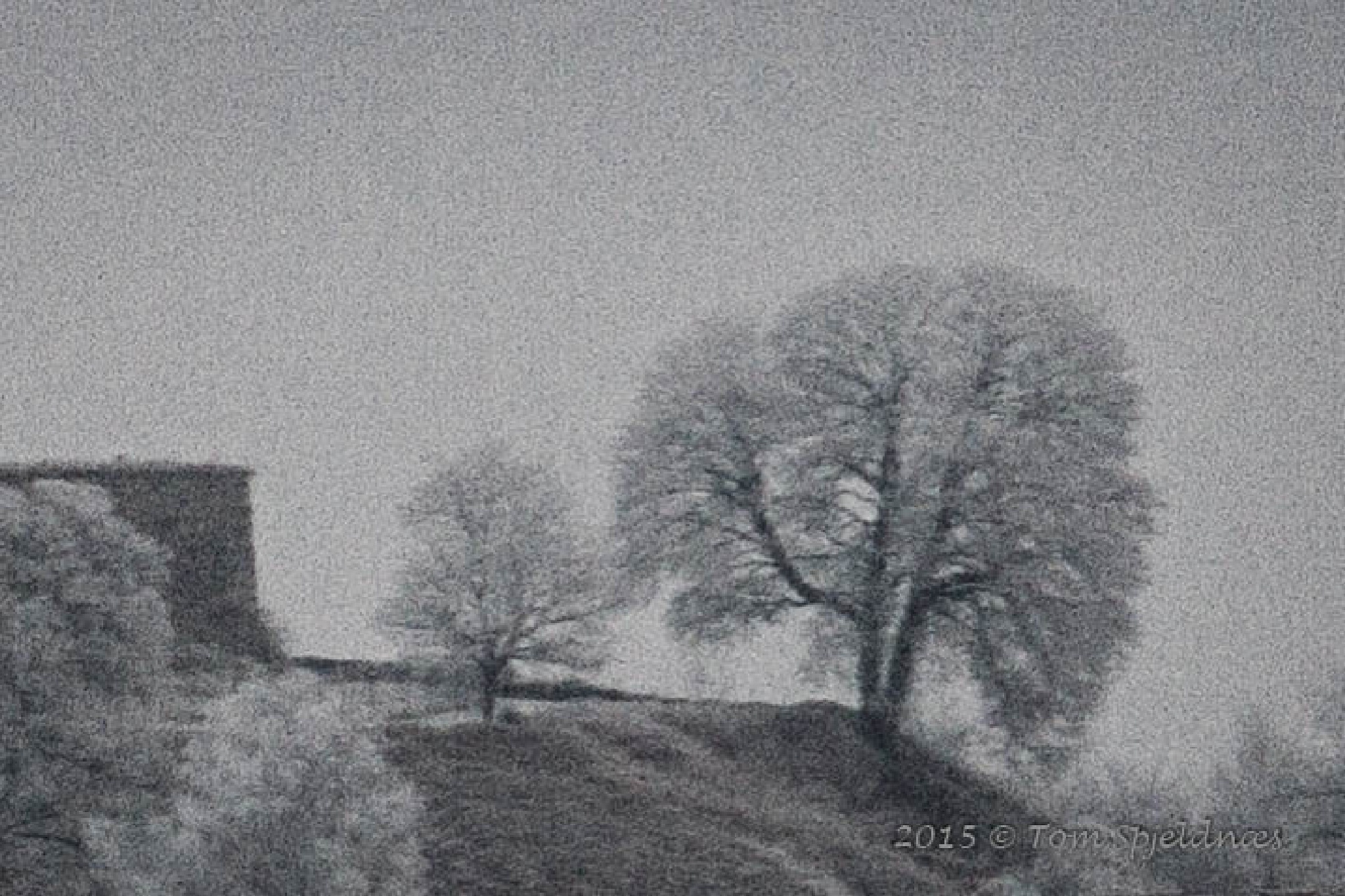 old tree by tom.spjeldnaes