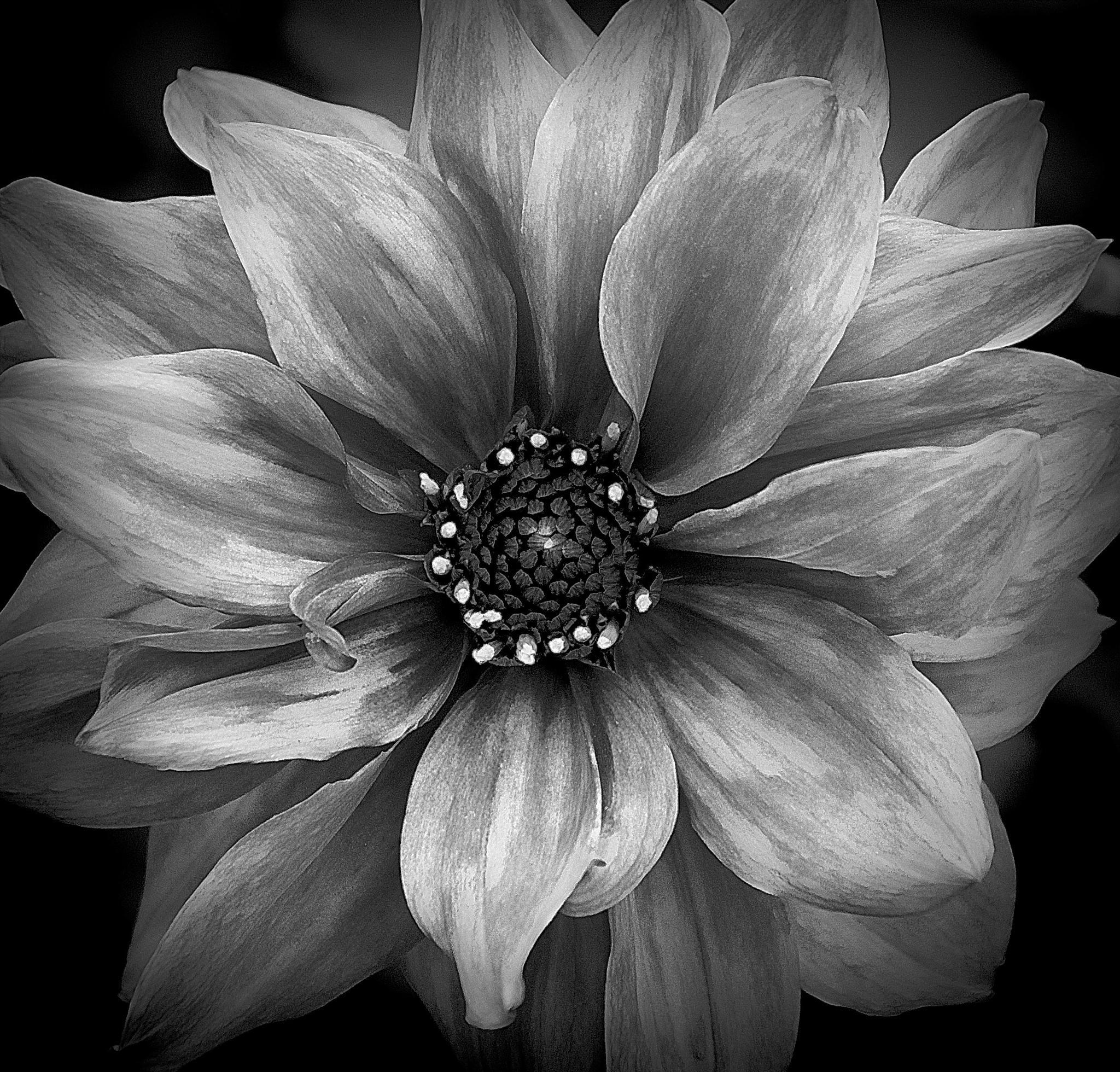 Power Flower No2 by Selman Adzomerovic