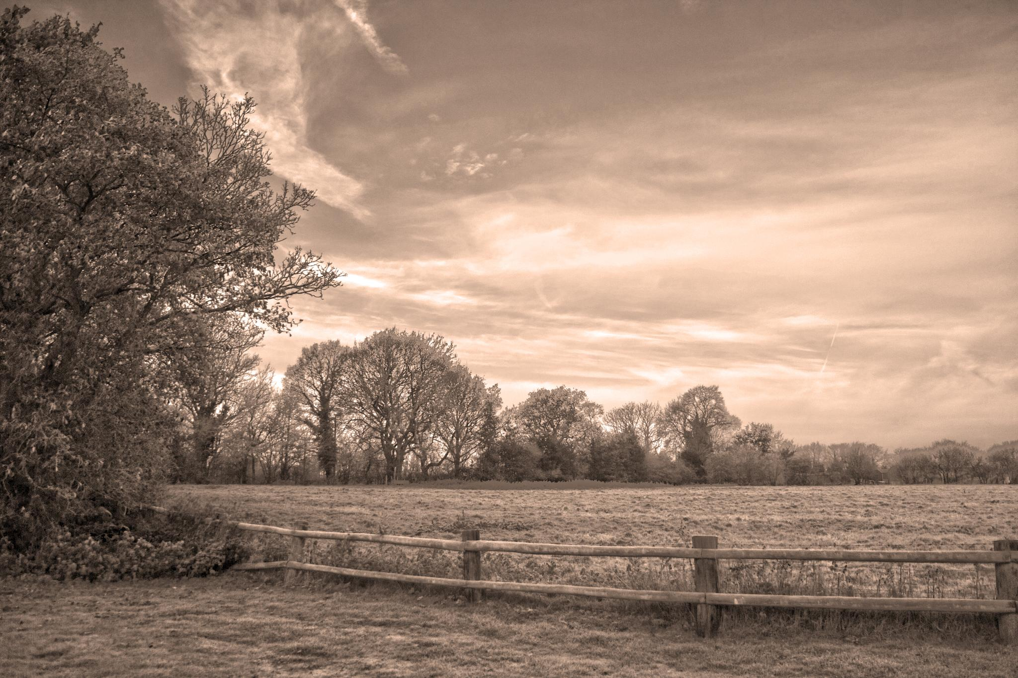 Frosty Morning - Sepia by Pick3rs