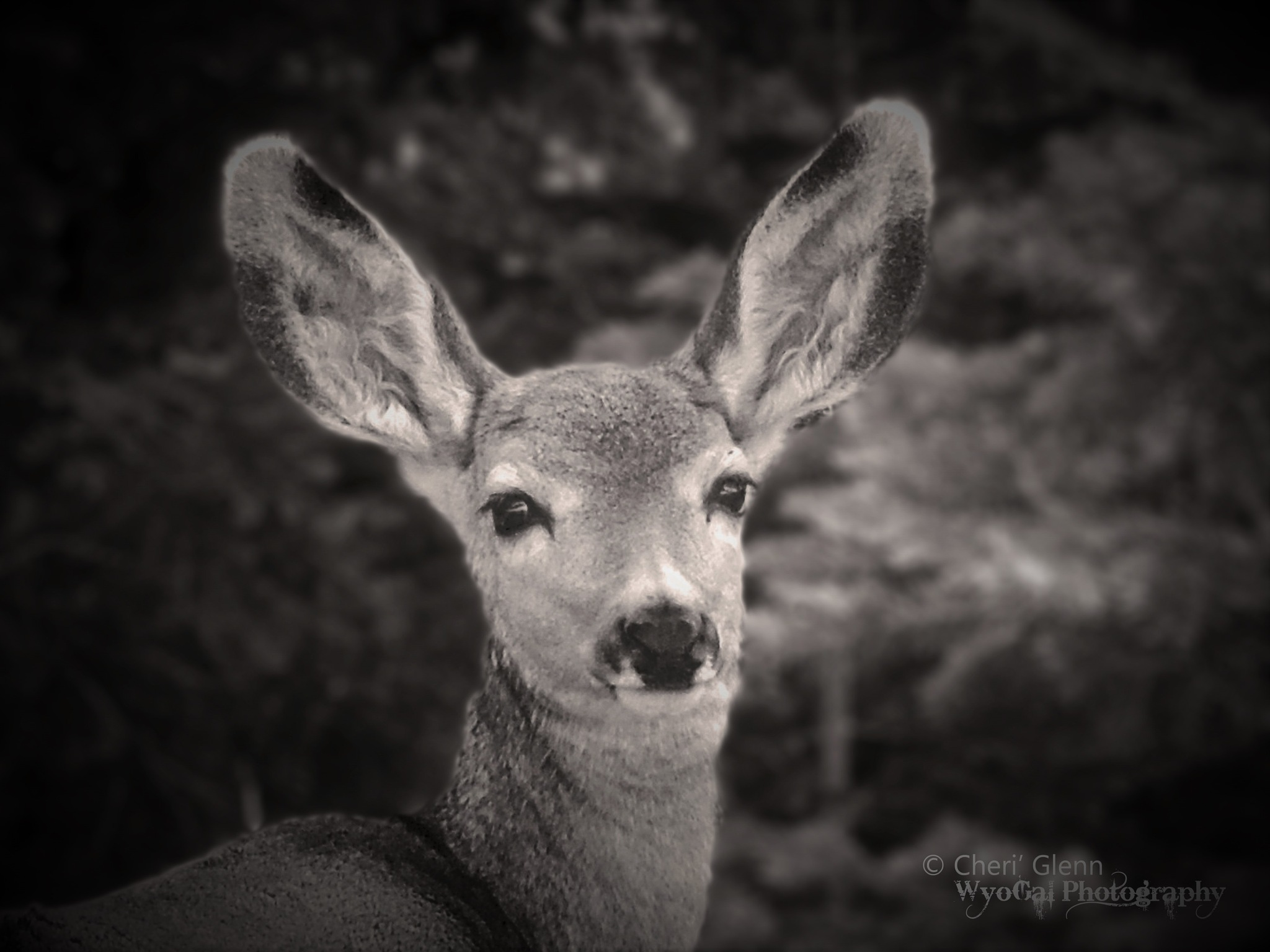 Young Doe by Cheri' Glenn ~ WyoGal Photography