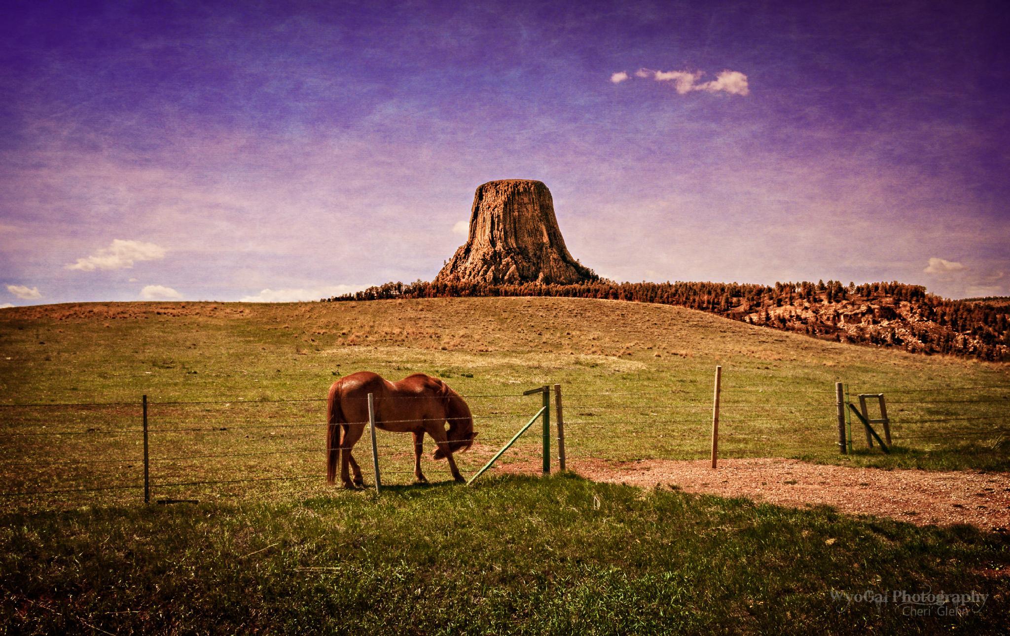 The Spirit of Wyoming by Cheri' Glenn ~ WyoGal Photography
