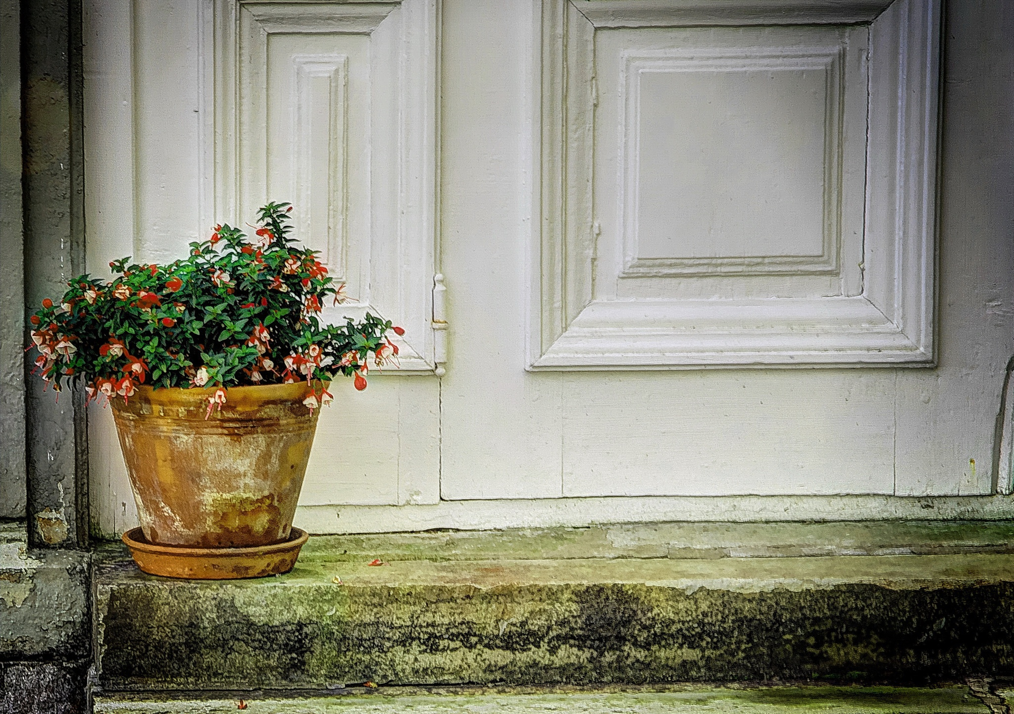 The lonely flowerpot by rockorbach