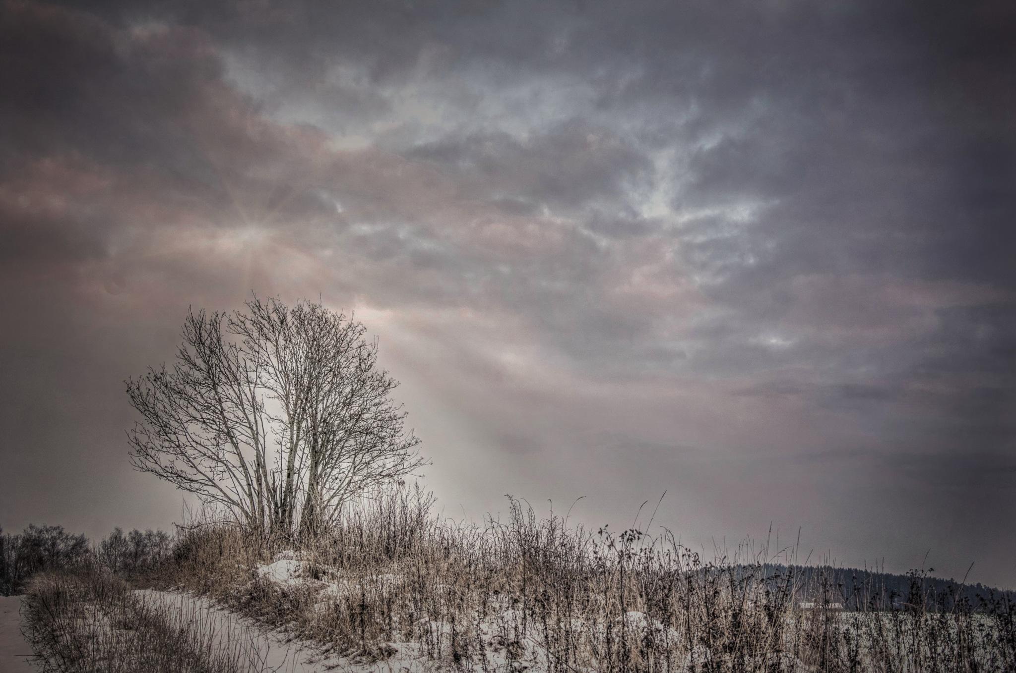 Winter Daylight by rockorbach