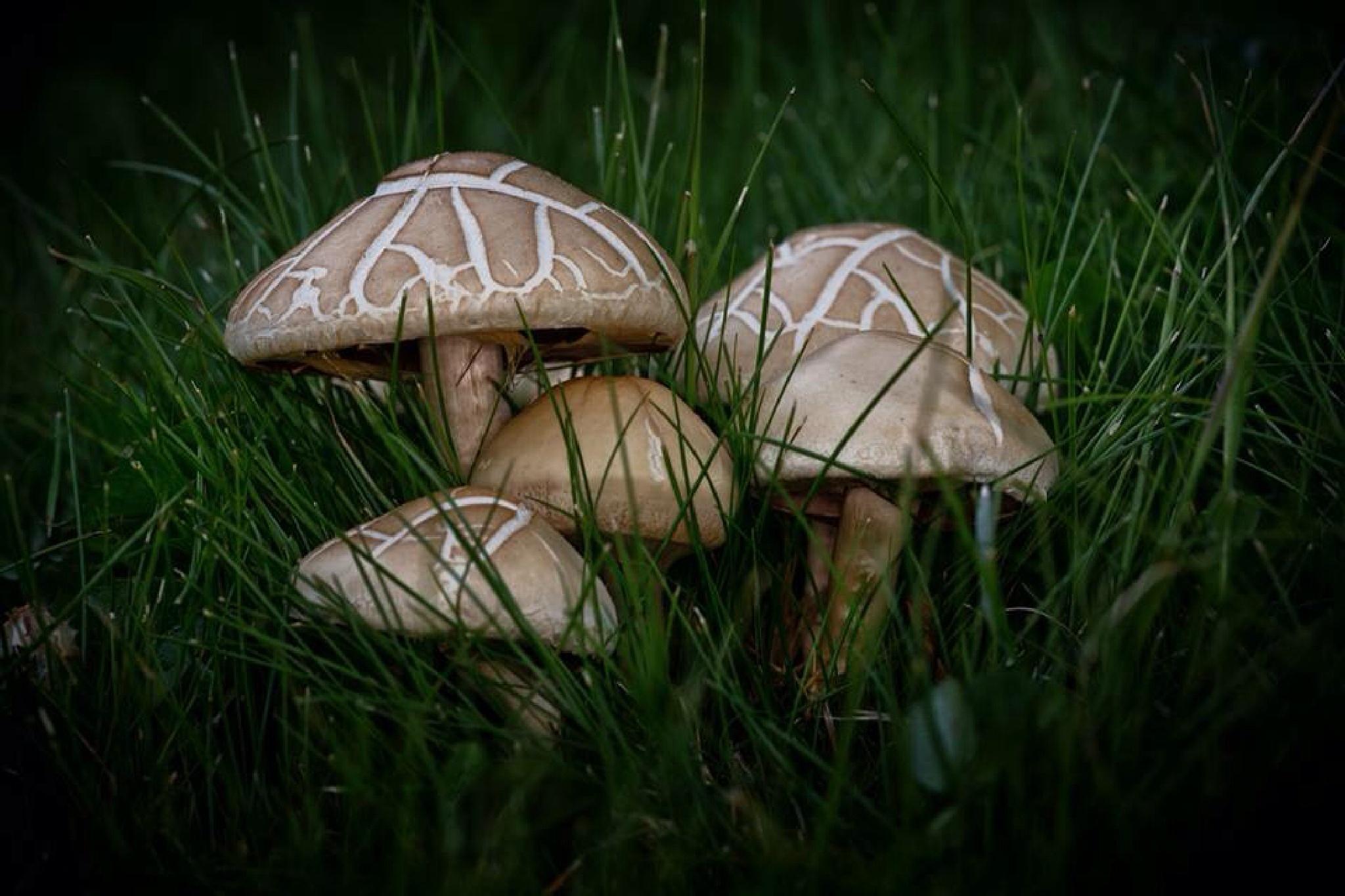 Mushrooms  by J_Salmeron