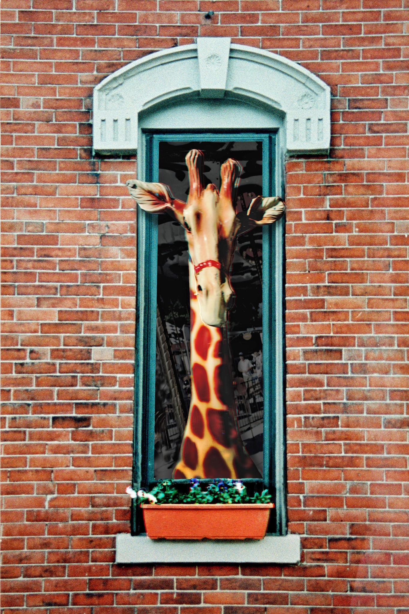 """The Neighbor's Giraffe"" by davidlstickney"