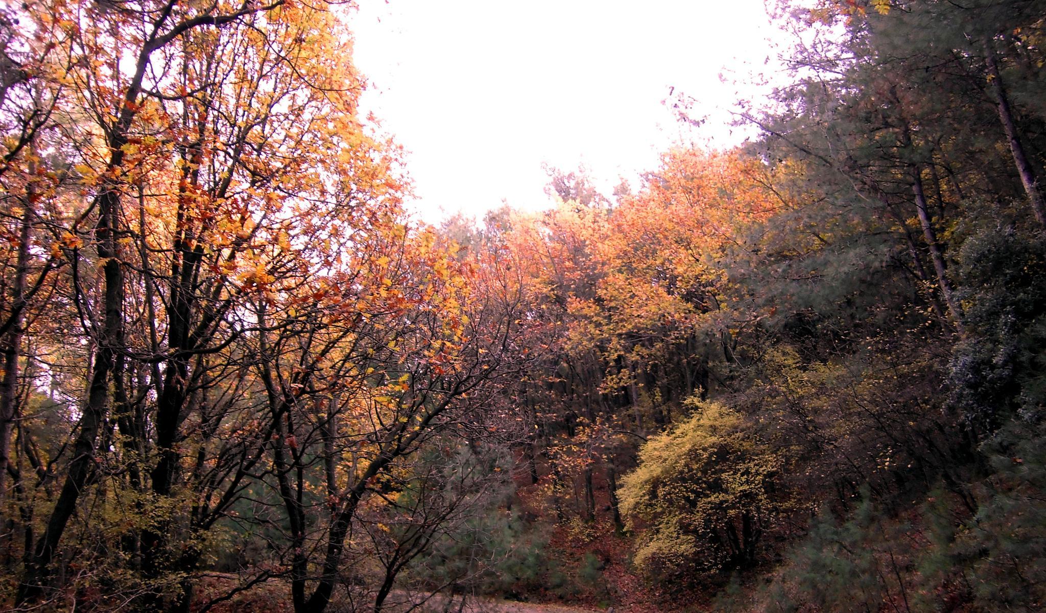 autumn by İrfan Ergün