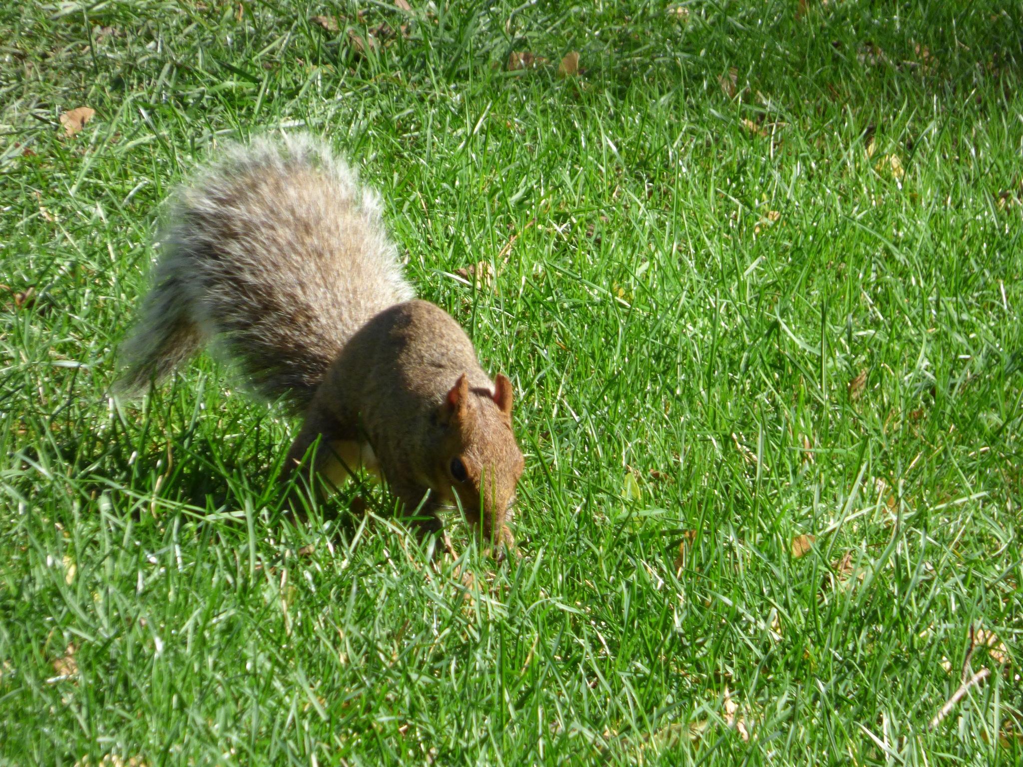 squirrel hunting by RegSoper